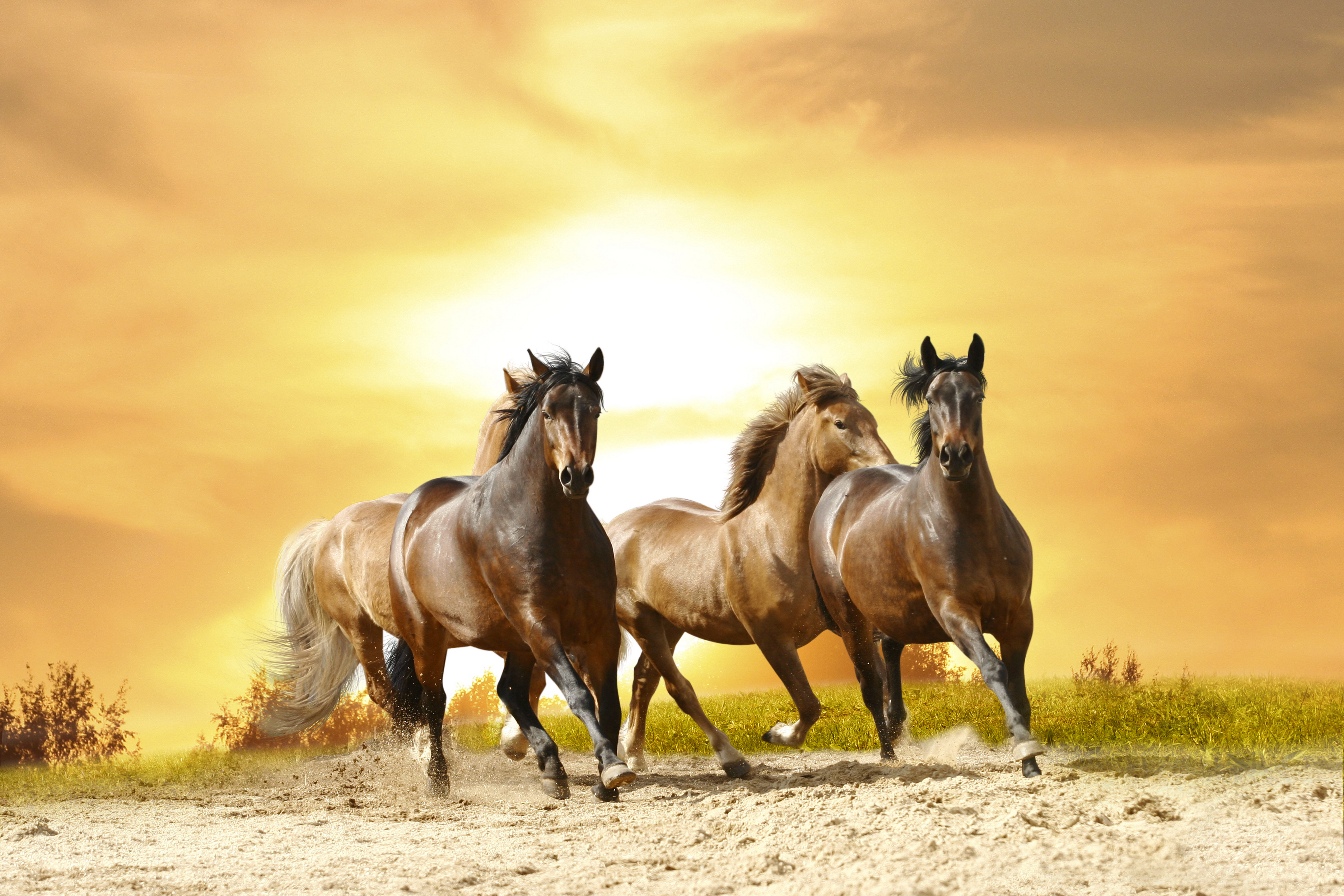 horses ins names released - HD6931×4672