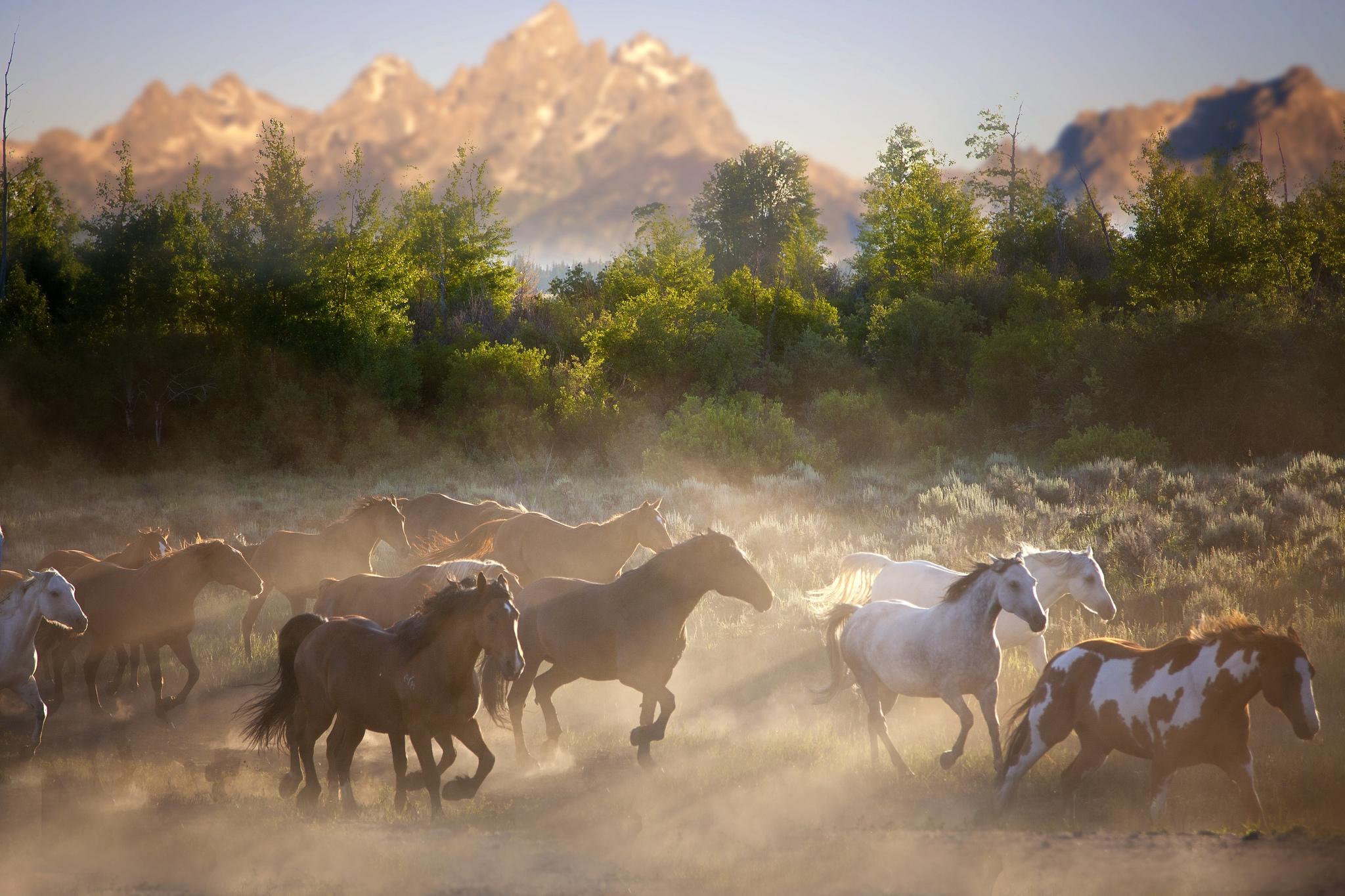 природа берег море гора скала лошадь наездник без смс
