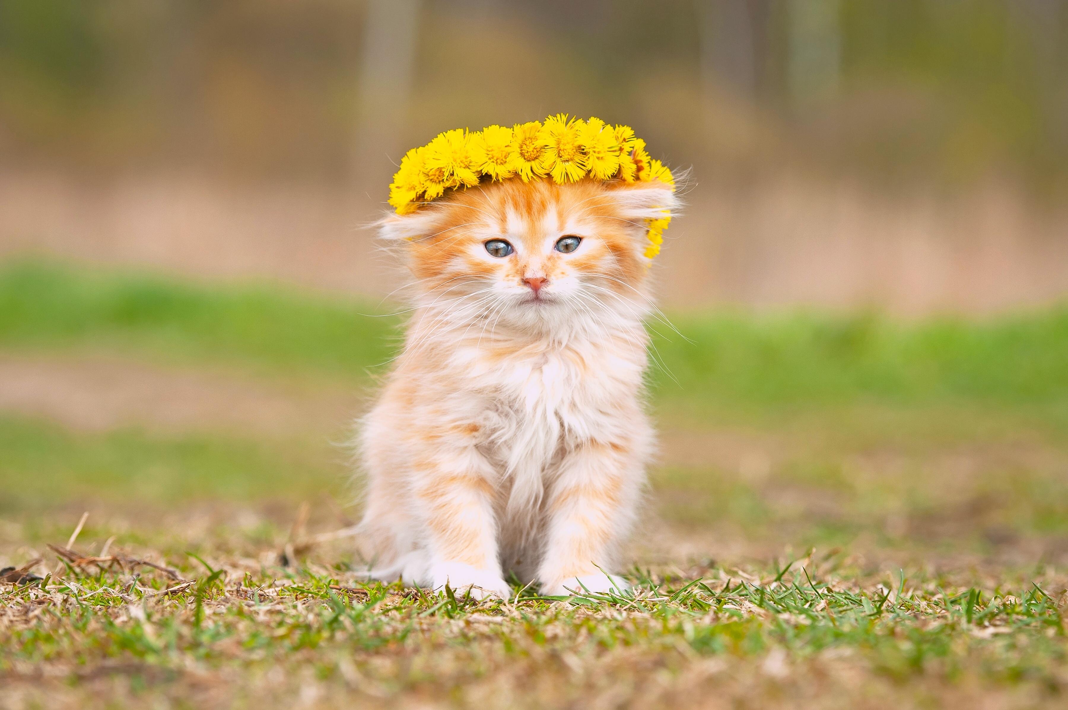 девушка котенок венок без смс