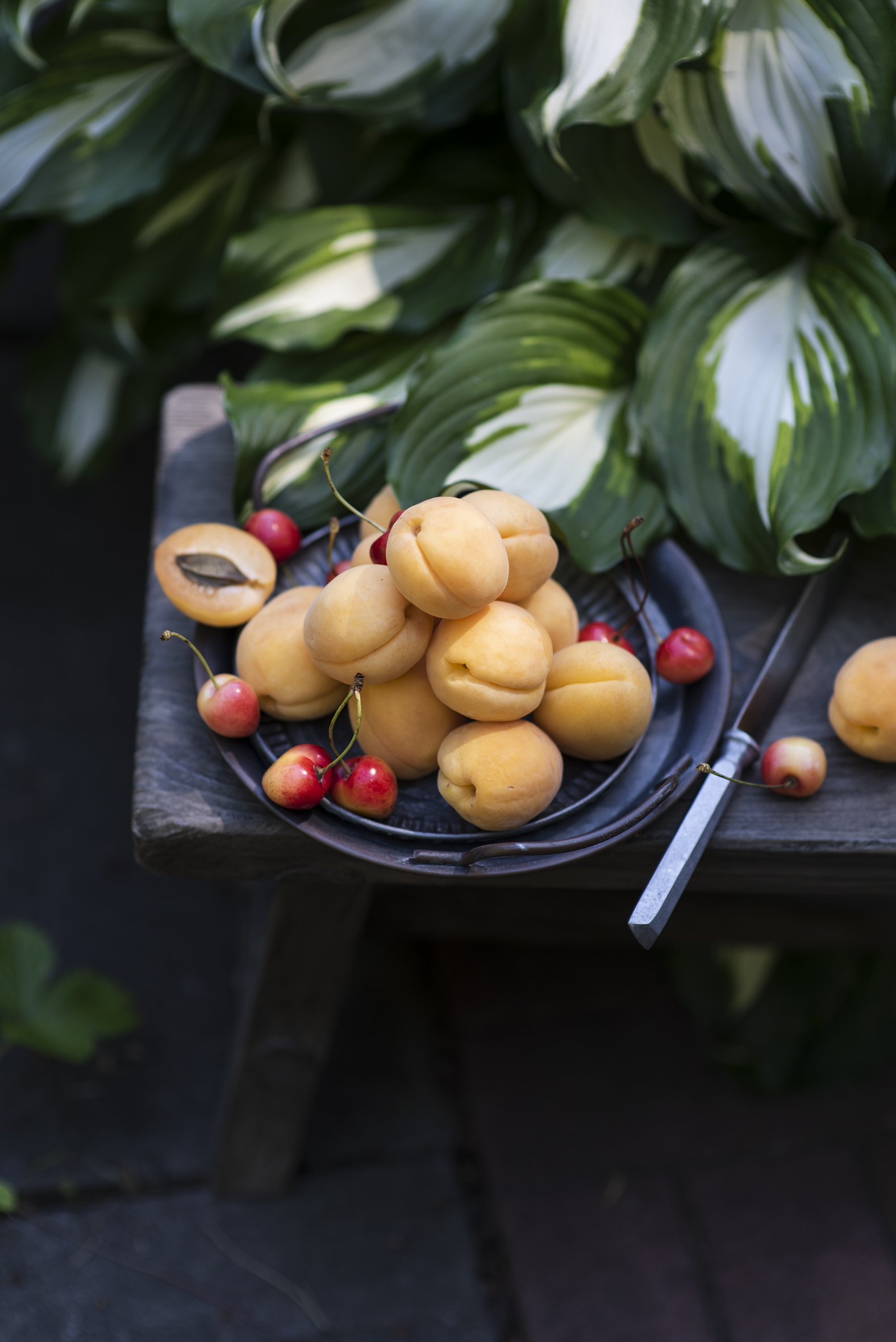 Картинка Листья Абрикос Черешня Пища  для мобильного телефона лист Листва Вишня Еда Продукты питания
