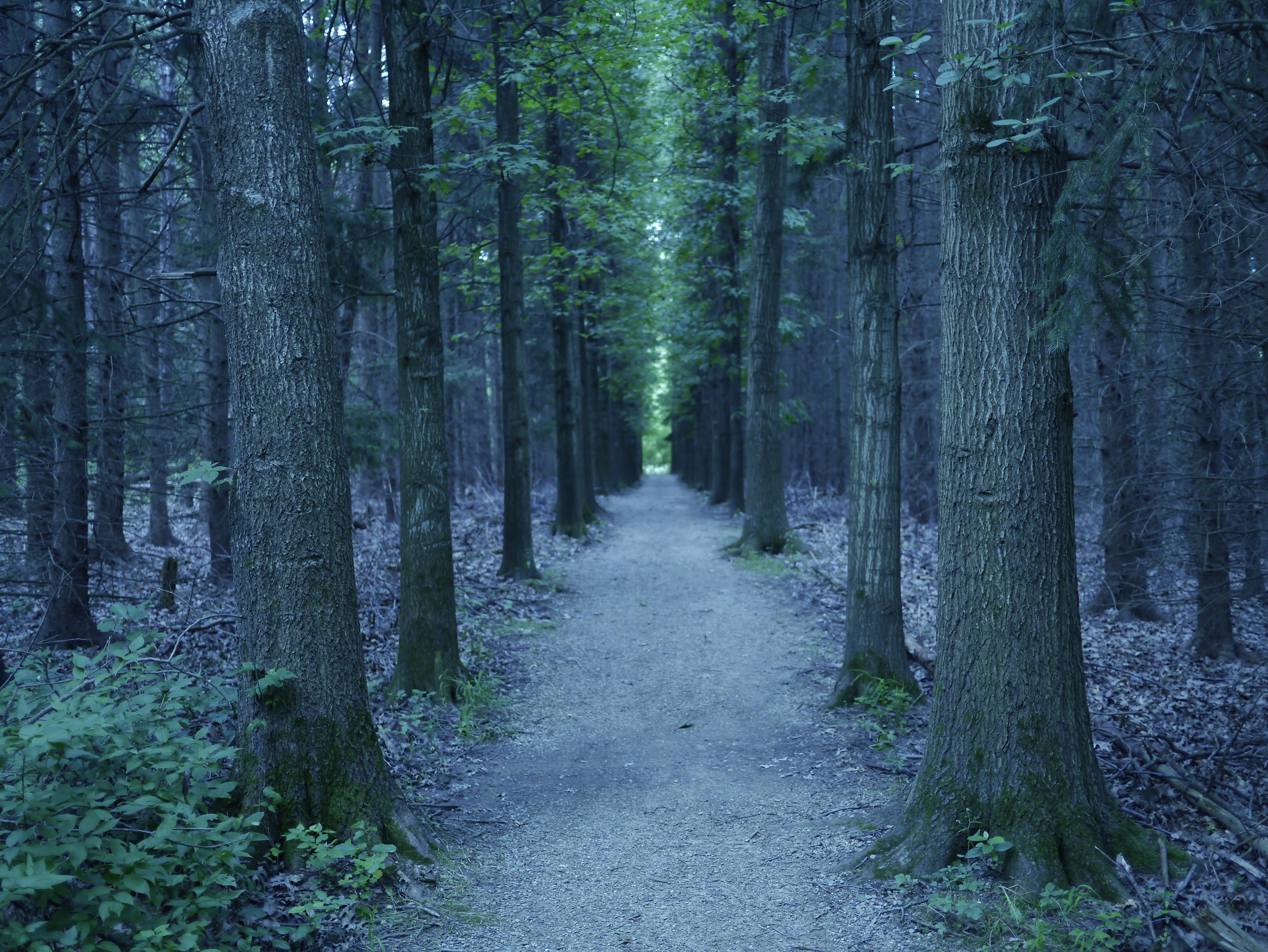 густой лес тропа природа загрузить