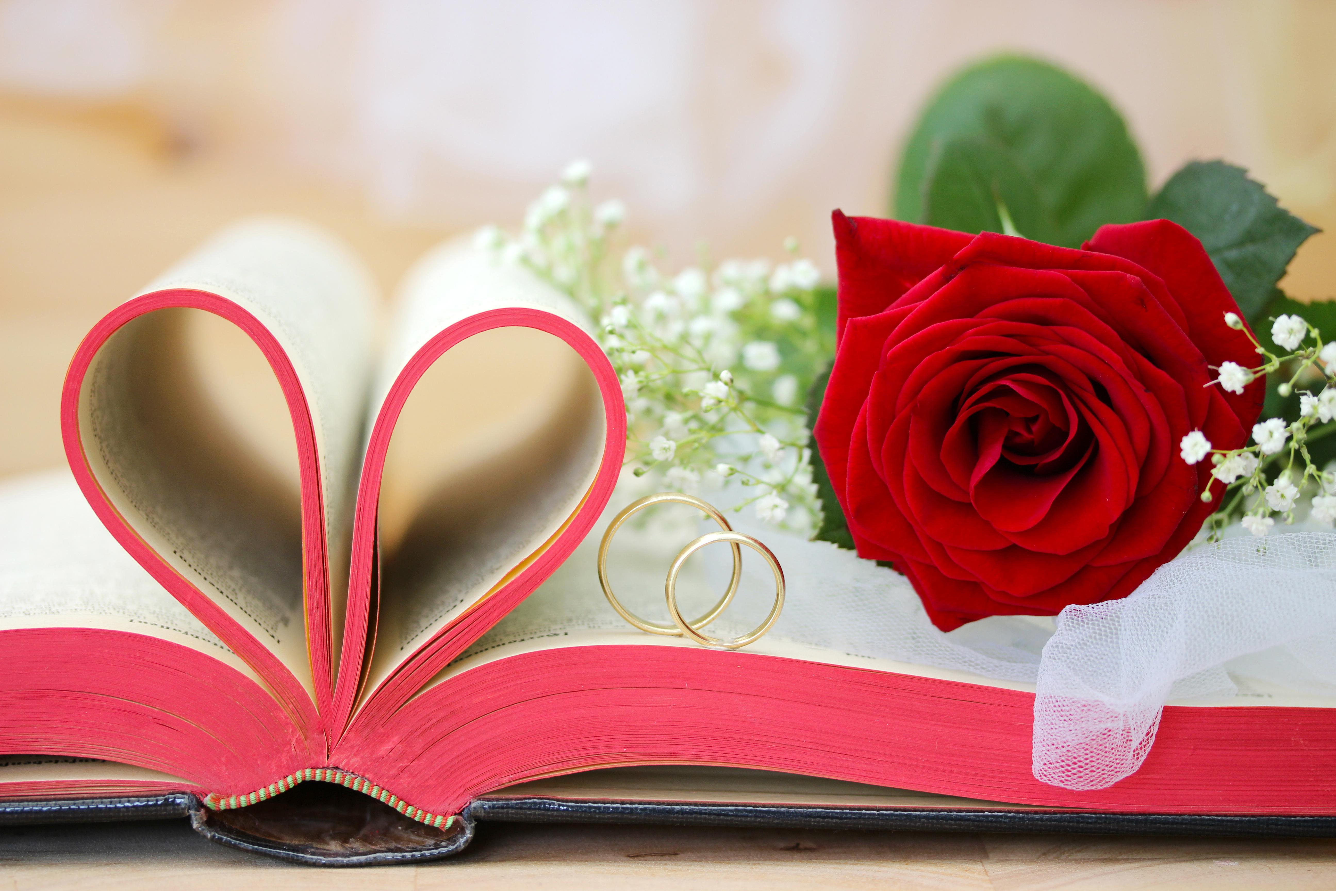 любовь цветок роза книга без смс