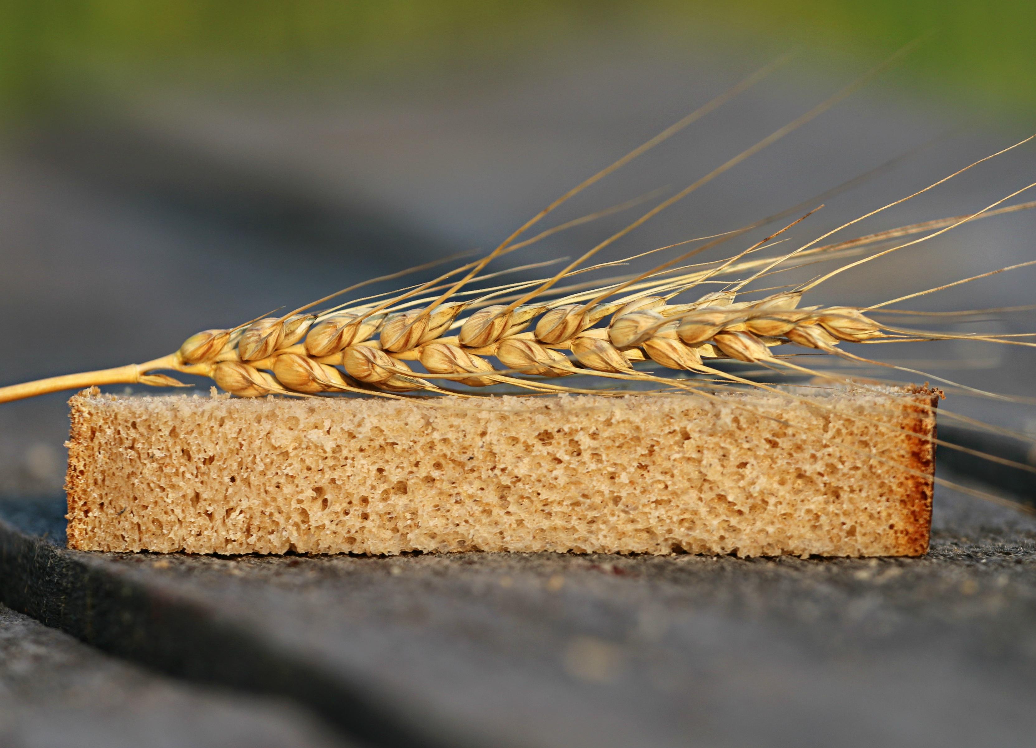 Картинка Пшеница Хлеб часть колосок Пища вблизи Кусок Колос кусочки кусочек колосья колоски Еда Продукты питания Крупным планом
