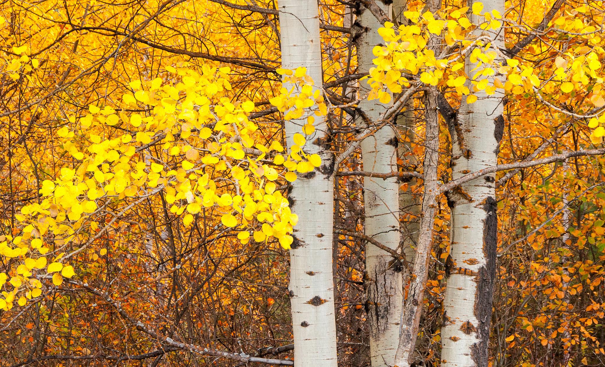 Ствол осеннего дерева без смс