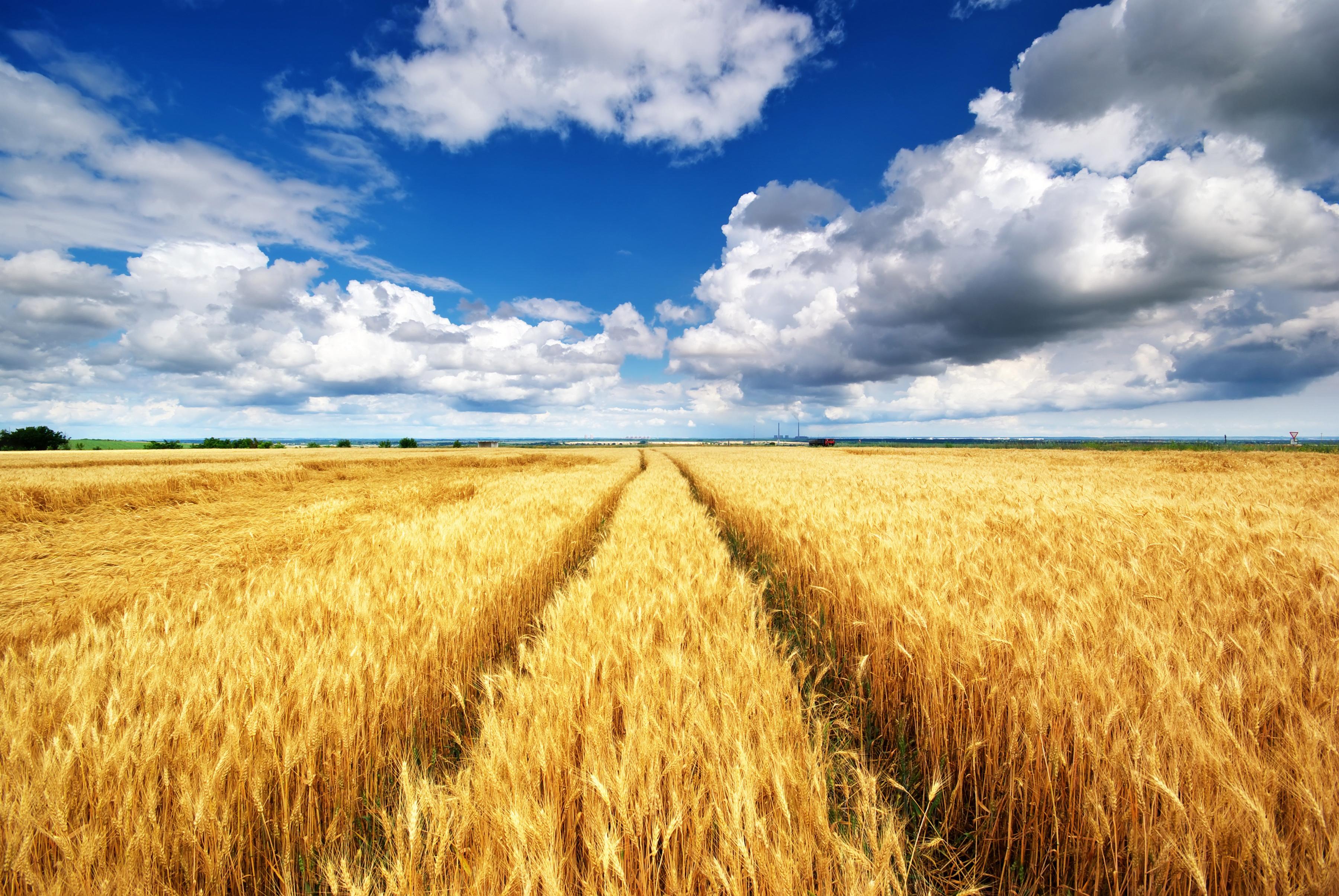 В Тверской области будут поддерживать производителей пшеницы и других культур