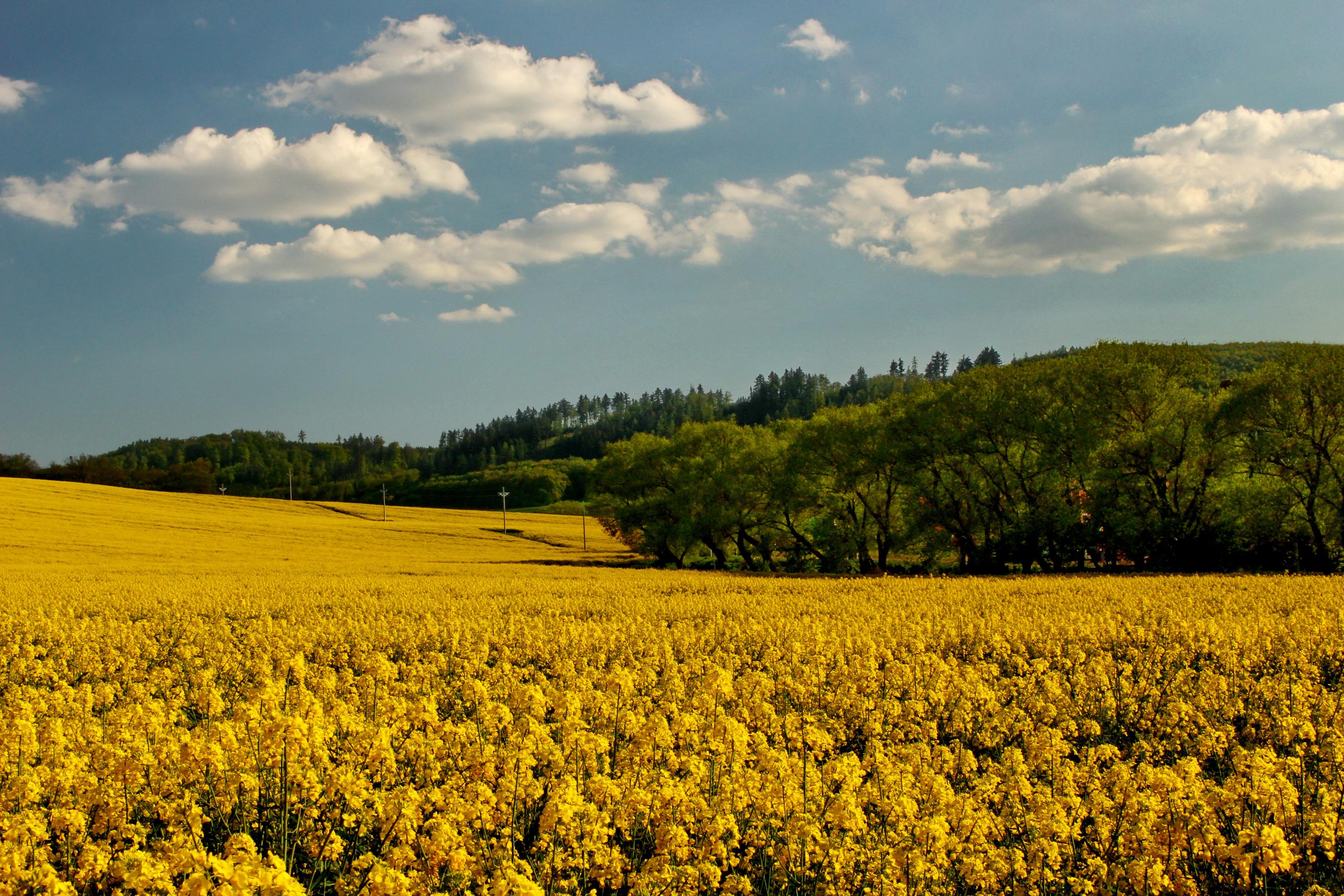поле дерево желтое загрузить