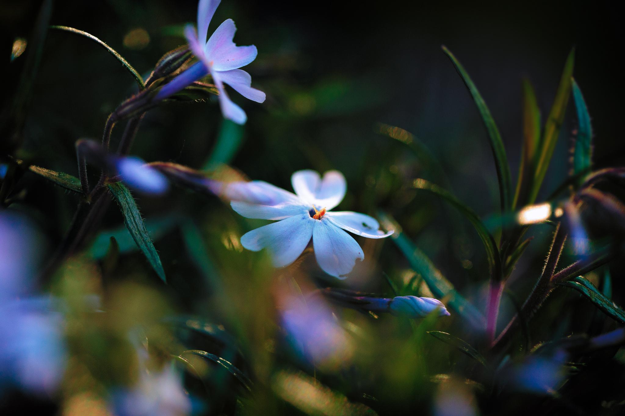 цветы свет блики загрузить