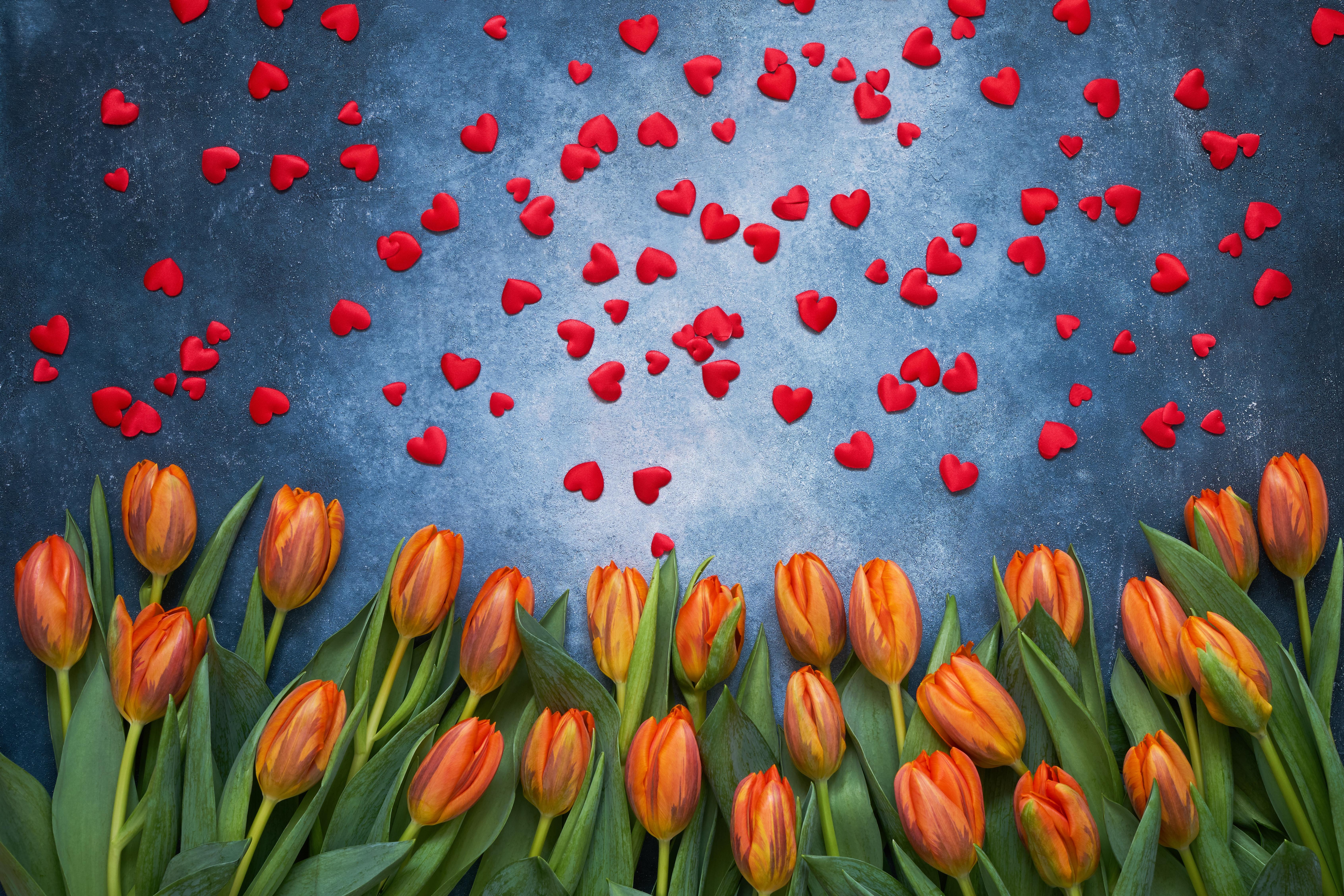 Фотография День святого Валентина сердечко Тюльпаны Цветы 6768x4512 День всех влюблённых серце сердца Сердце