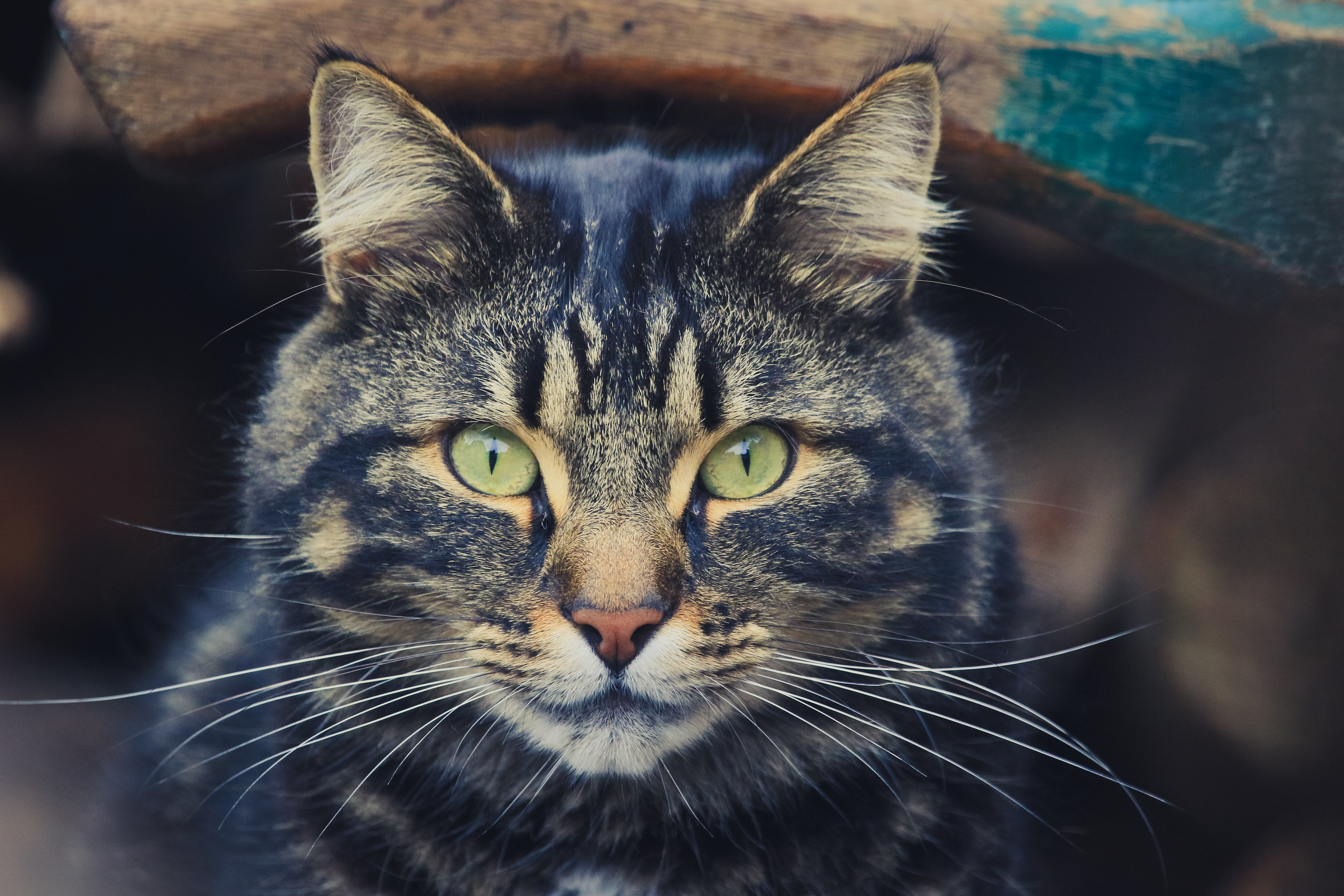 Кот взгляд загрузить