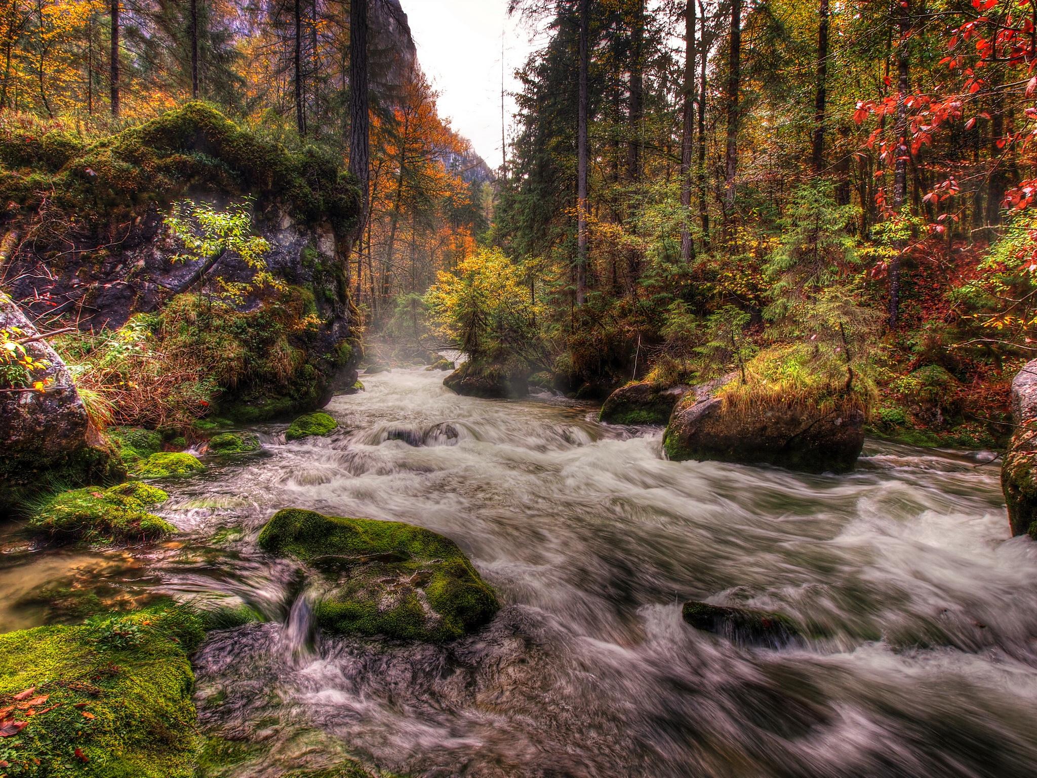 природа камни река деревья nature stones river trees загрузить