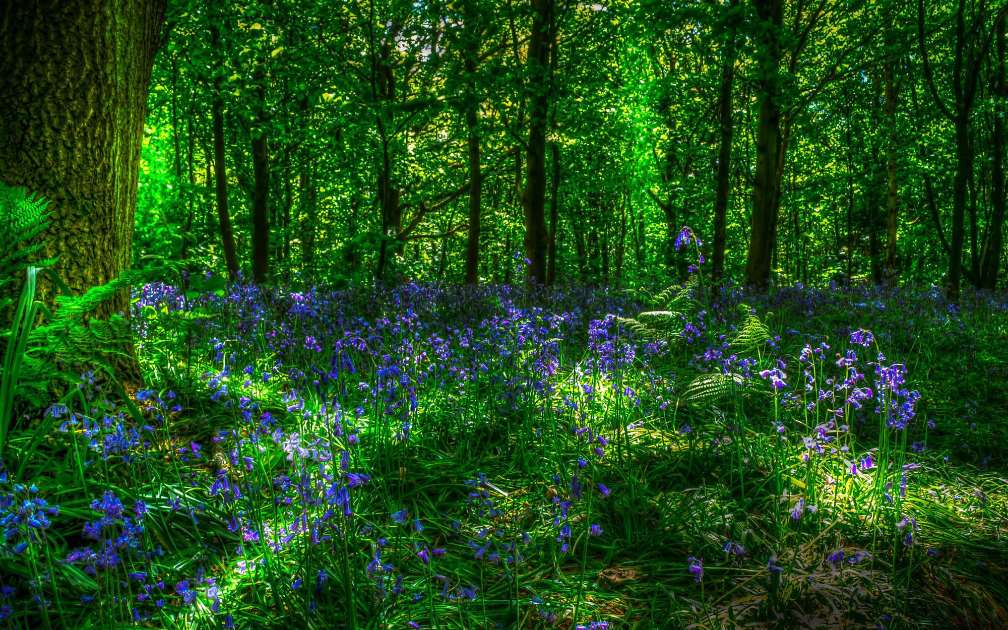 цветы лесные flowers forest скачать