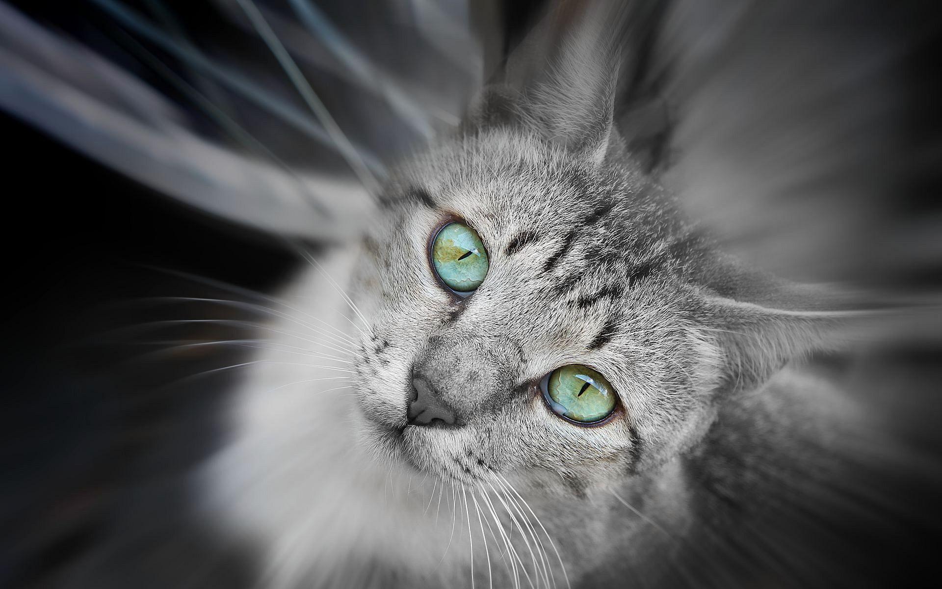 кот с бирюзовыми глазами скачать