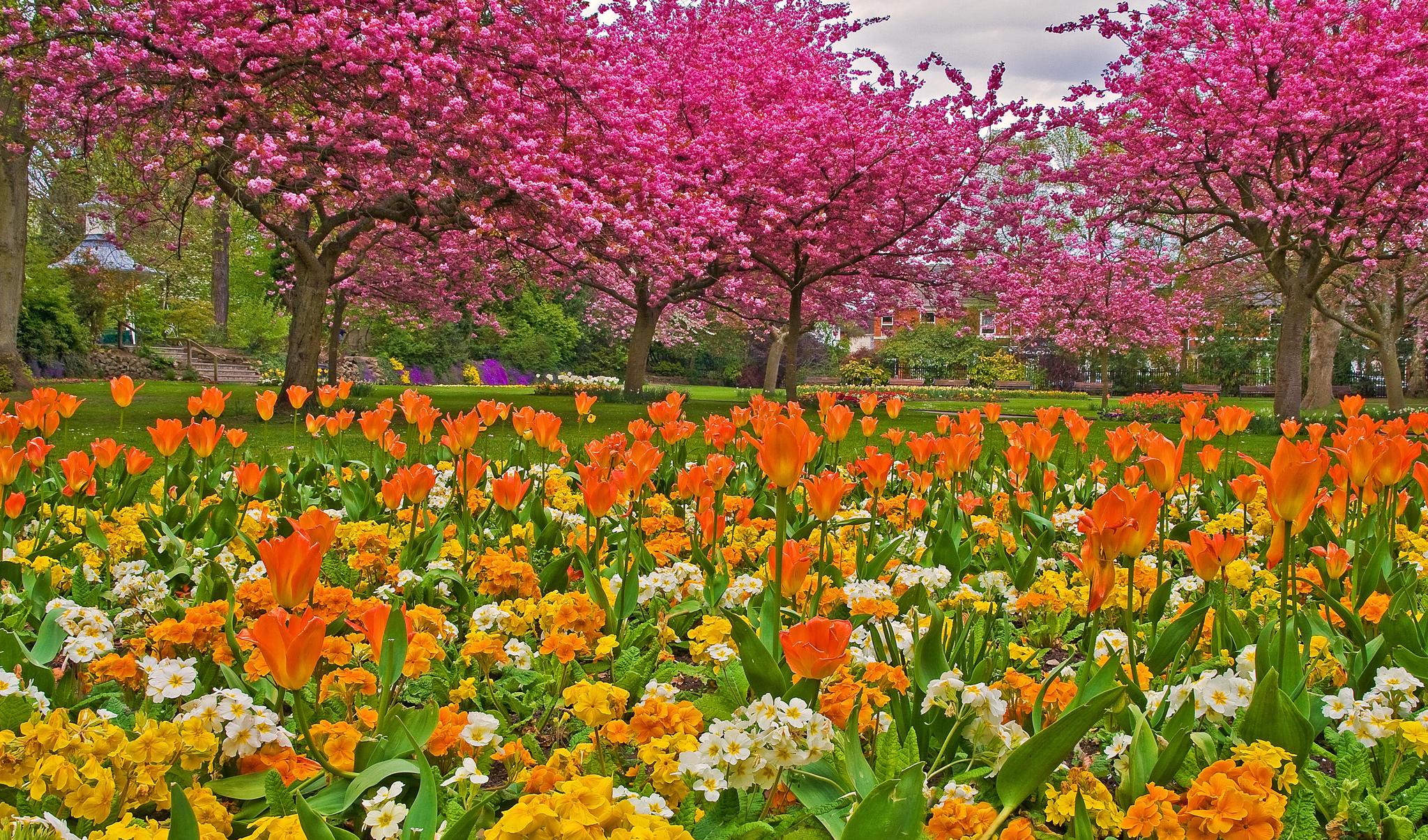 Тюльпаны среди деревьев загрузить