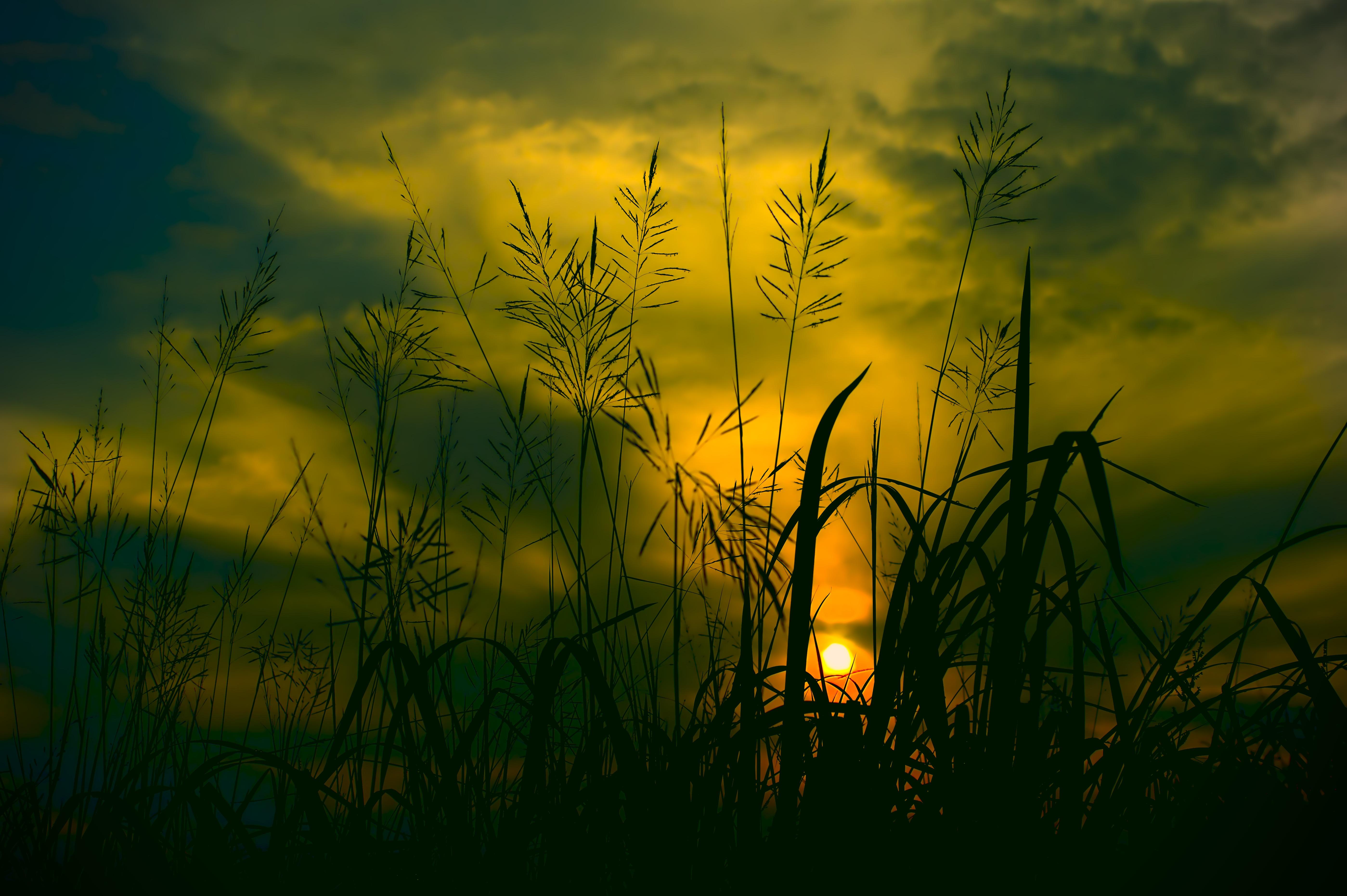 Фотография Силуэт Природа рассвет и закат траве 5596x3724 силуэта силуэты Рассветы и закаты Трава