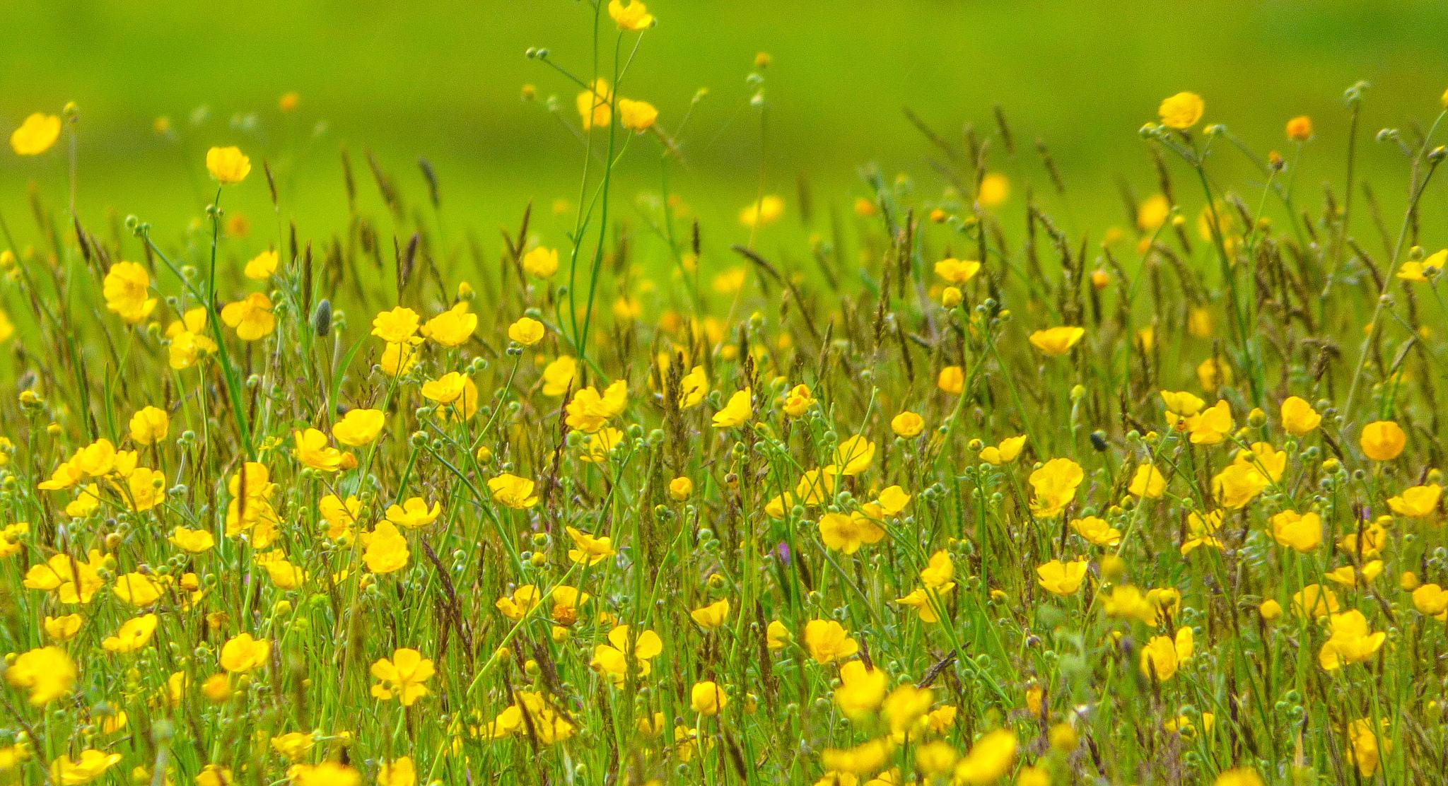 Желтый цветок в зеленой траве без смс