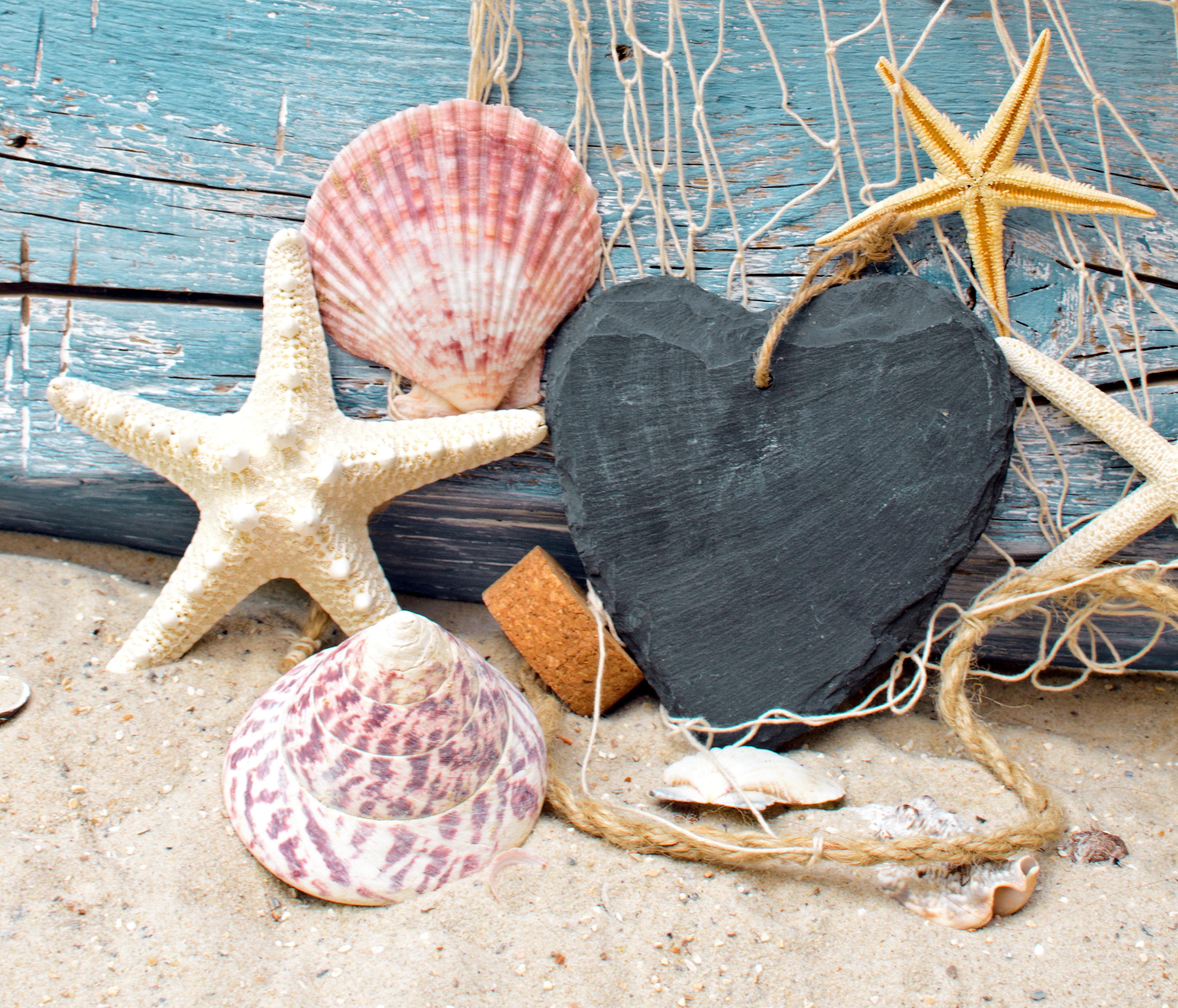 природа украшения морская звезда раковина загрузить
