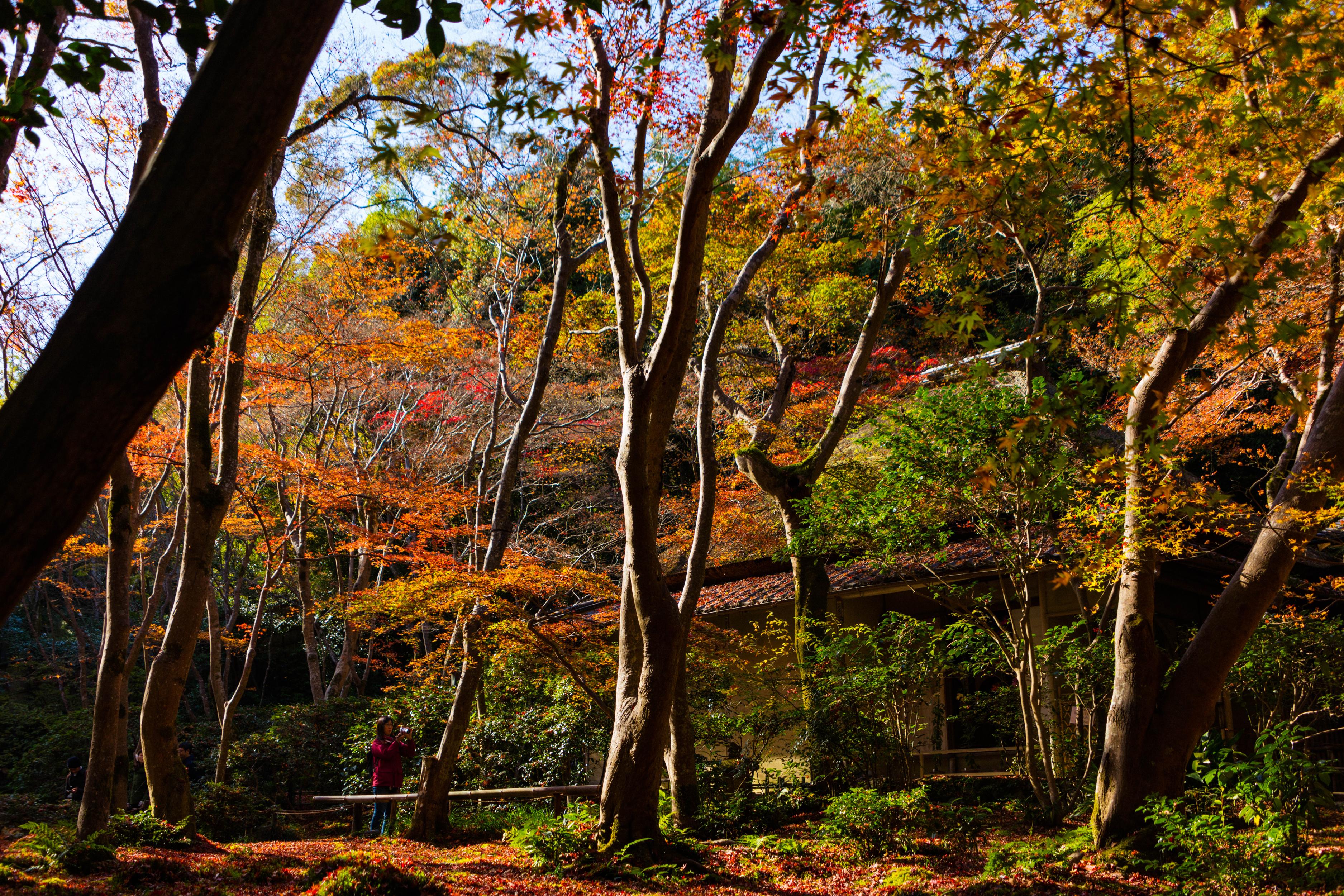 Парк осень солнце скачать
