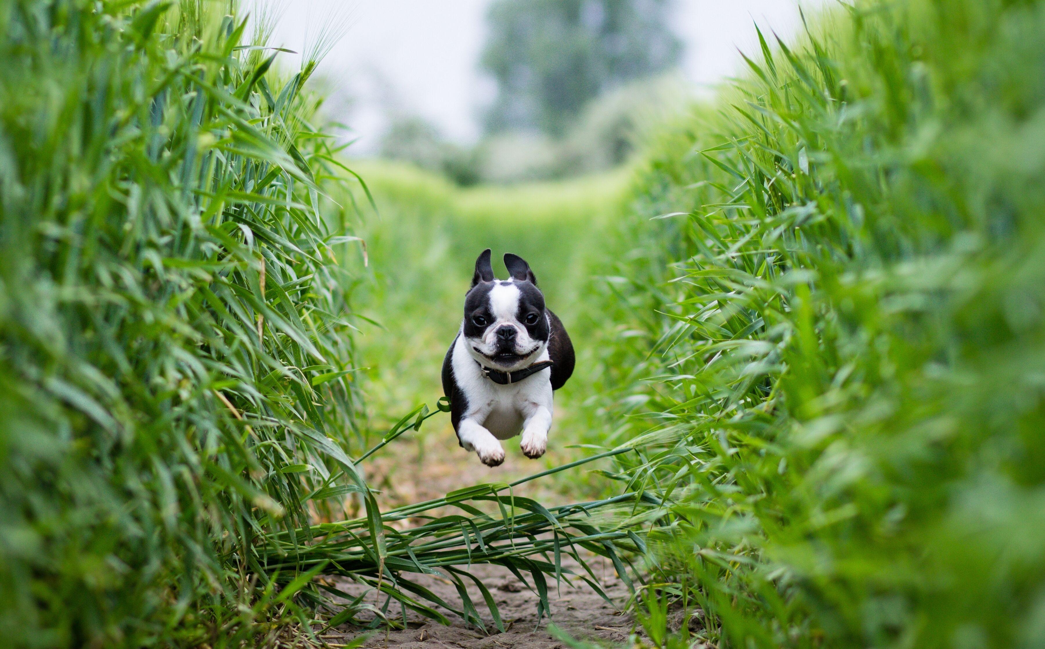 собака трава в поле без смс