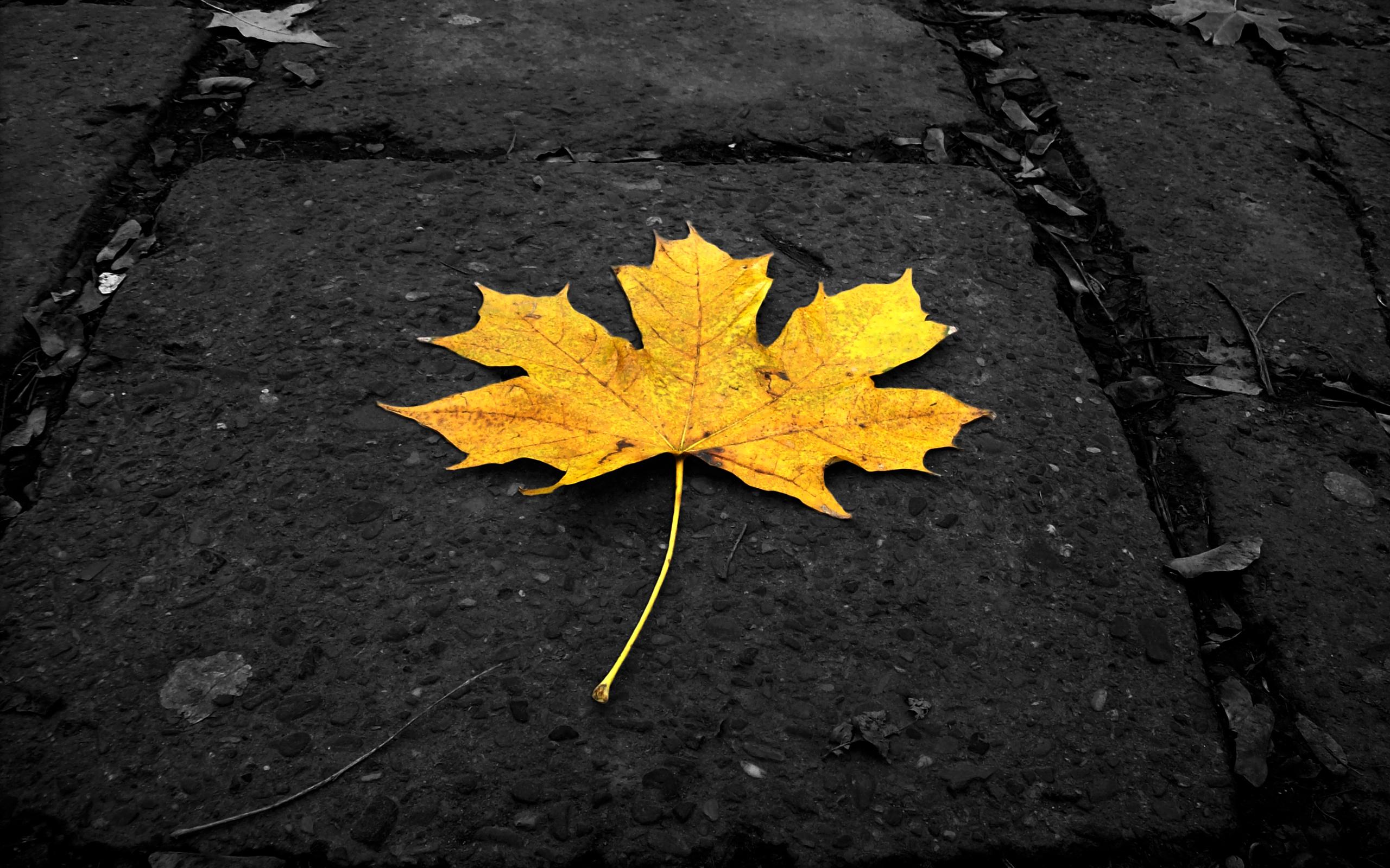 Обои желтые, асфальт, осень. Природа foto 15