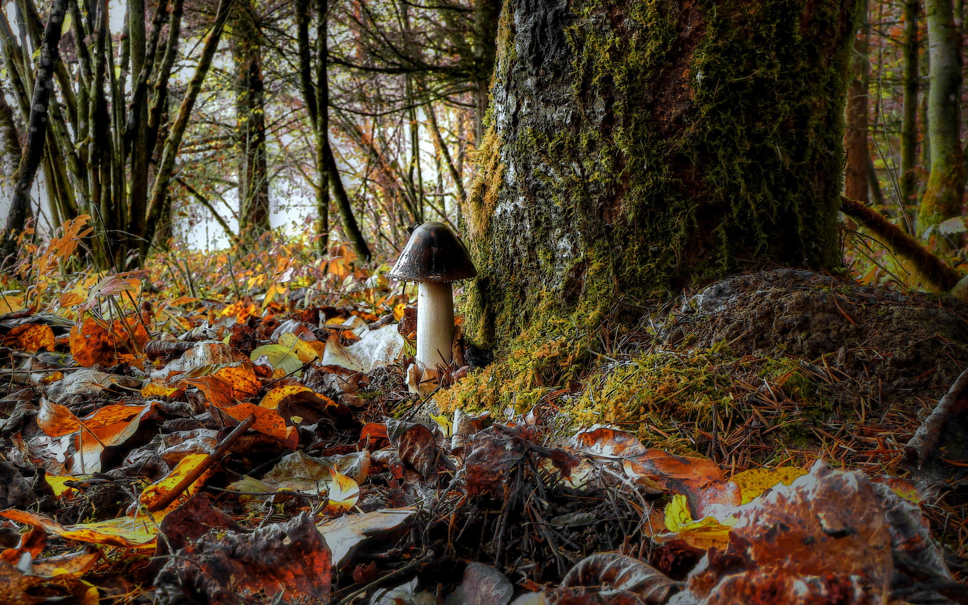 грибы природа осень листья без смс