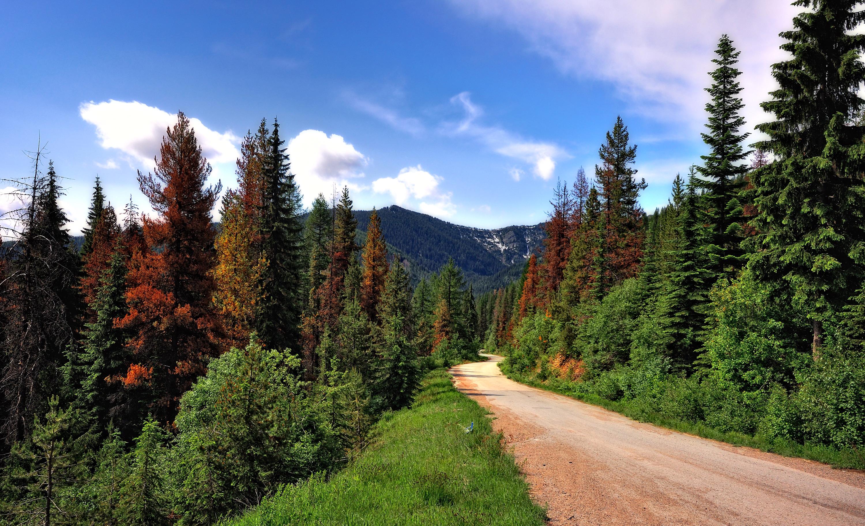 горы, лес, деревья без смс
