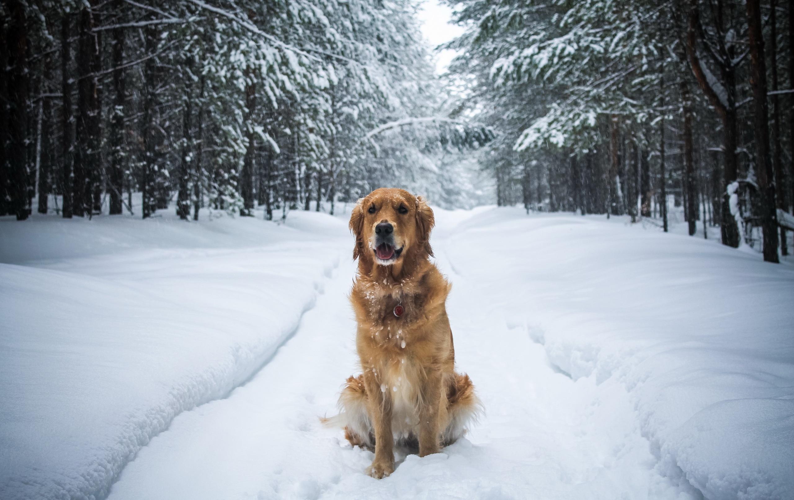 Собаки зимой