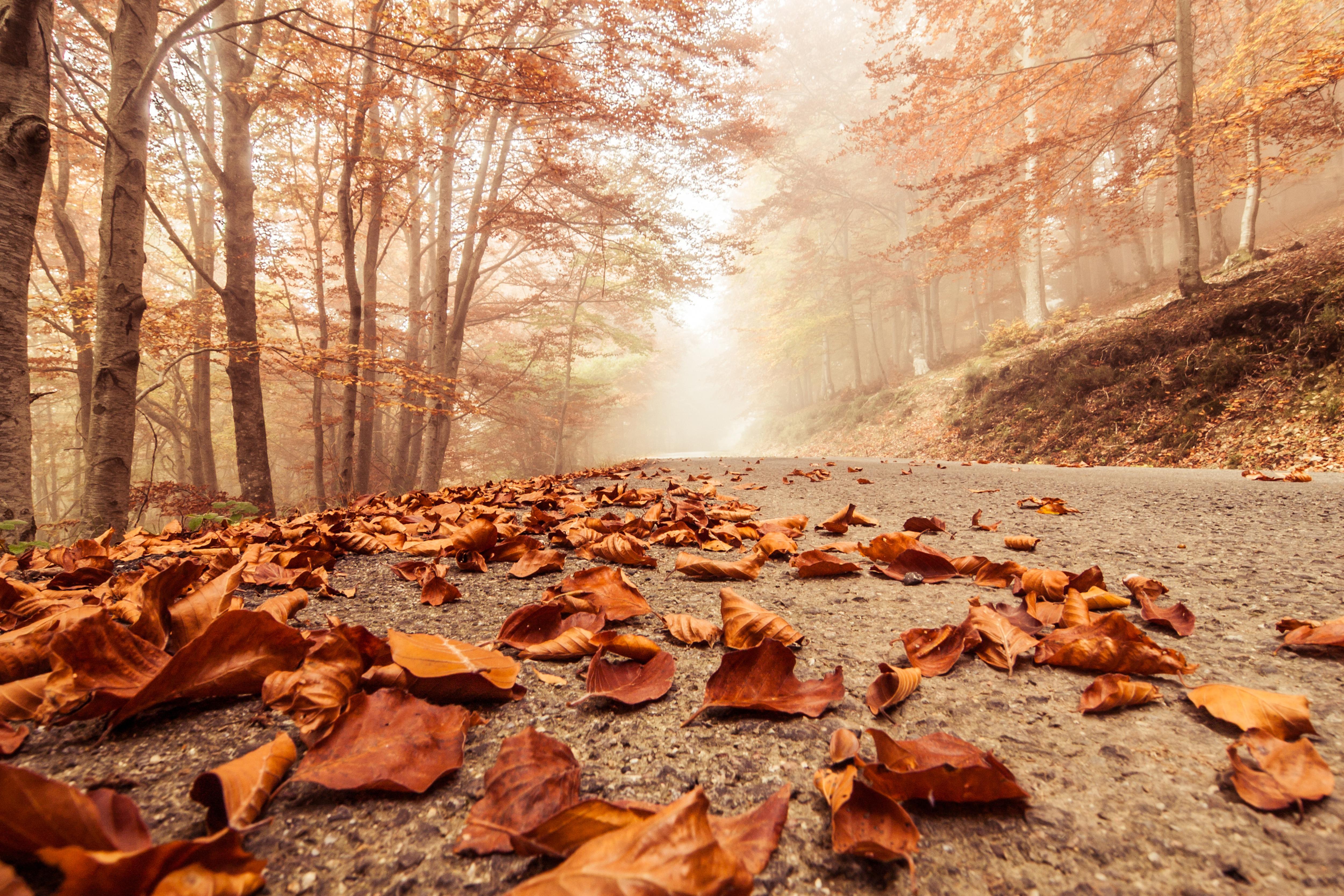 Дорога из осенних листьев без смс