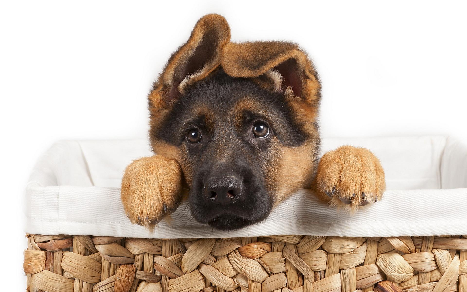 красивая собака бесплатно
