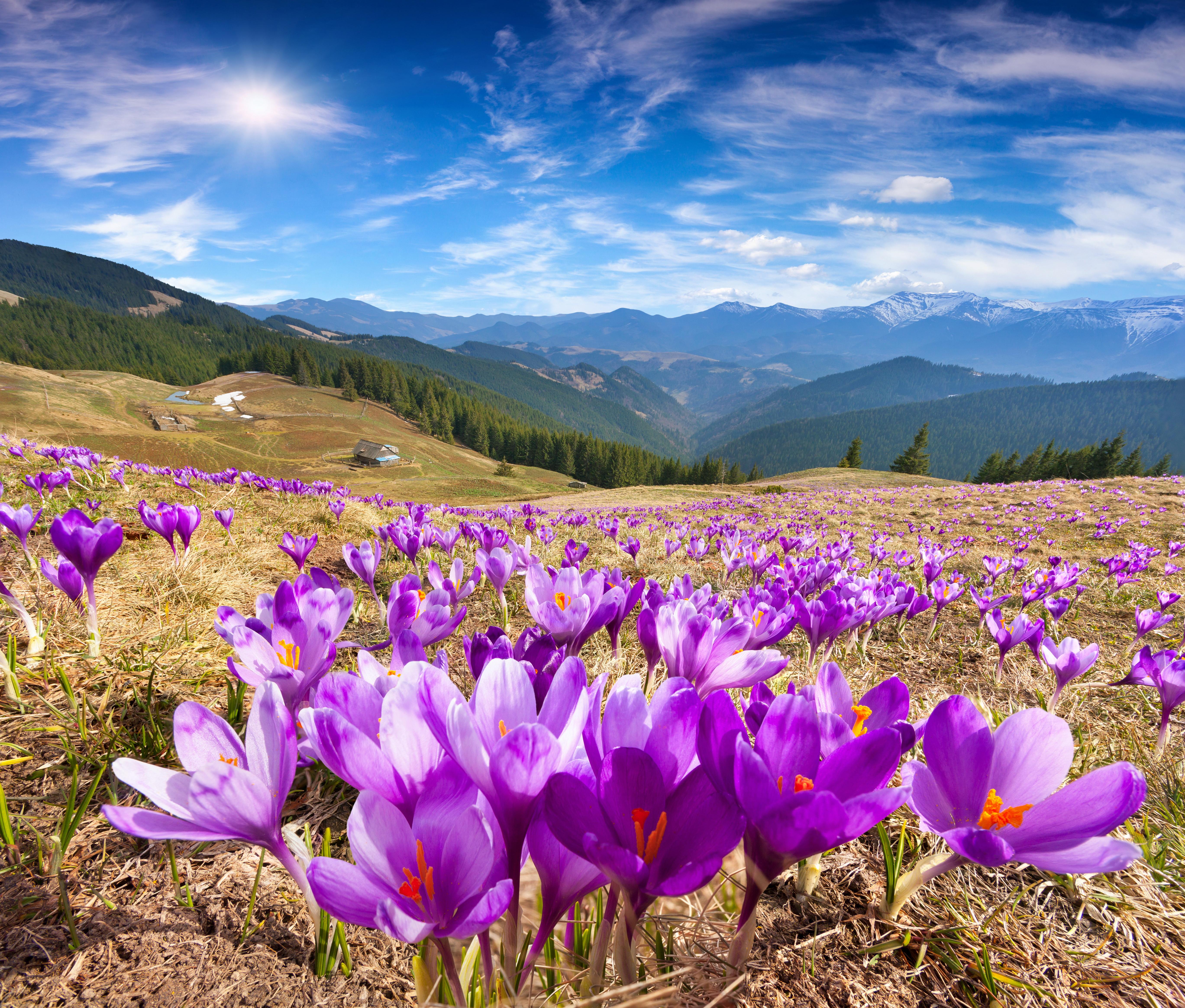 Картинки красивые ромашки 35 фото  Прикольные картинки