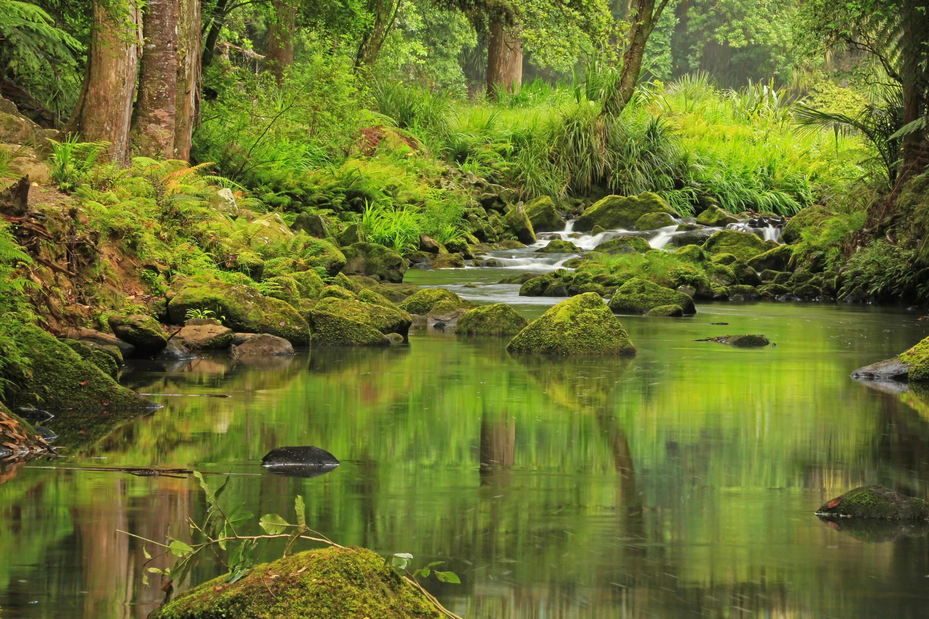 природа река Новая Зеландия скачать