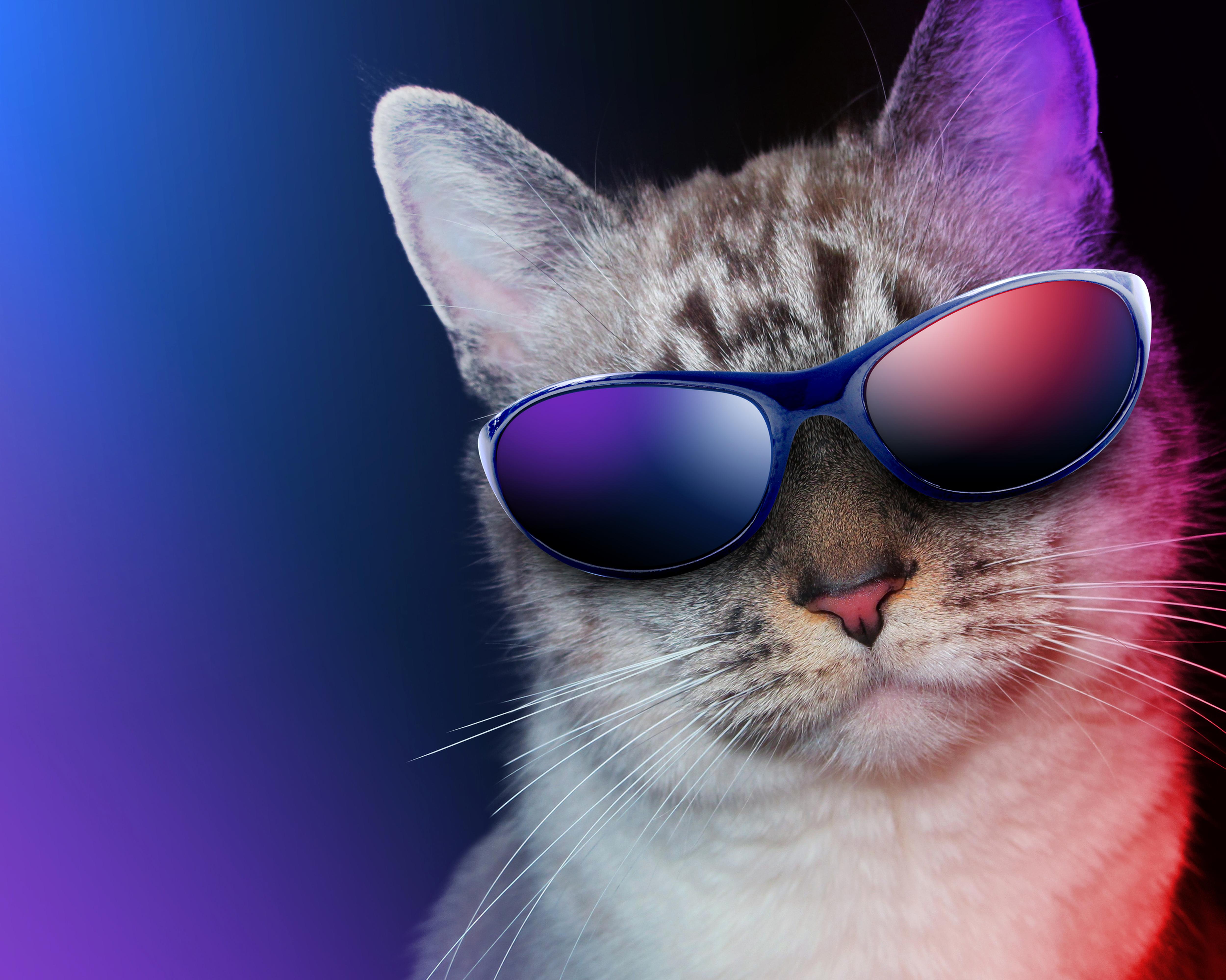 природа кот животное очки прикольное без смс
