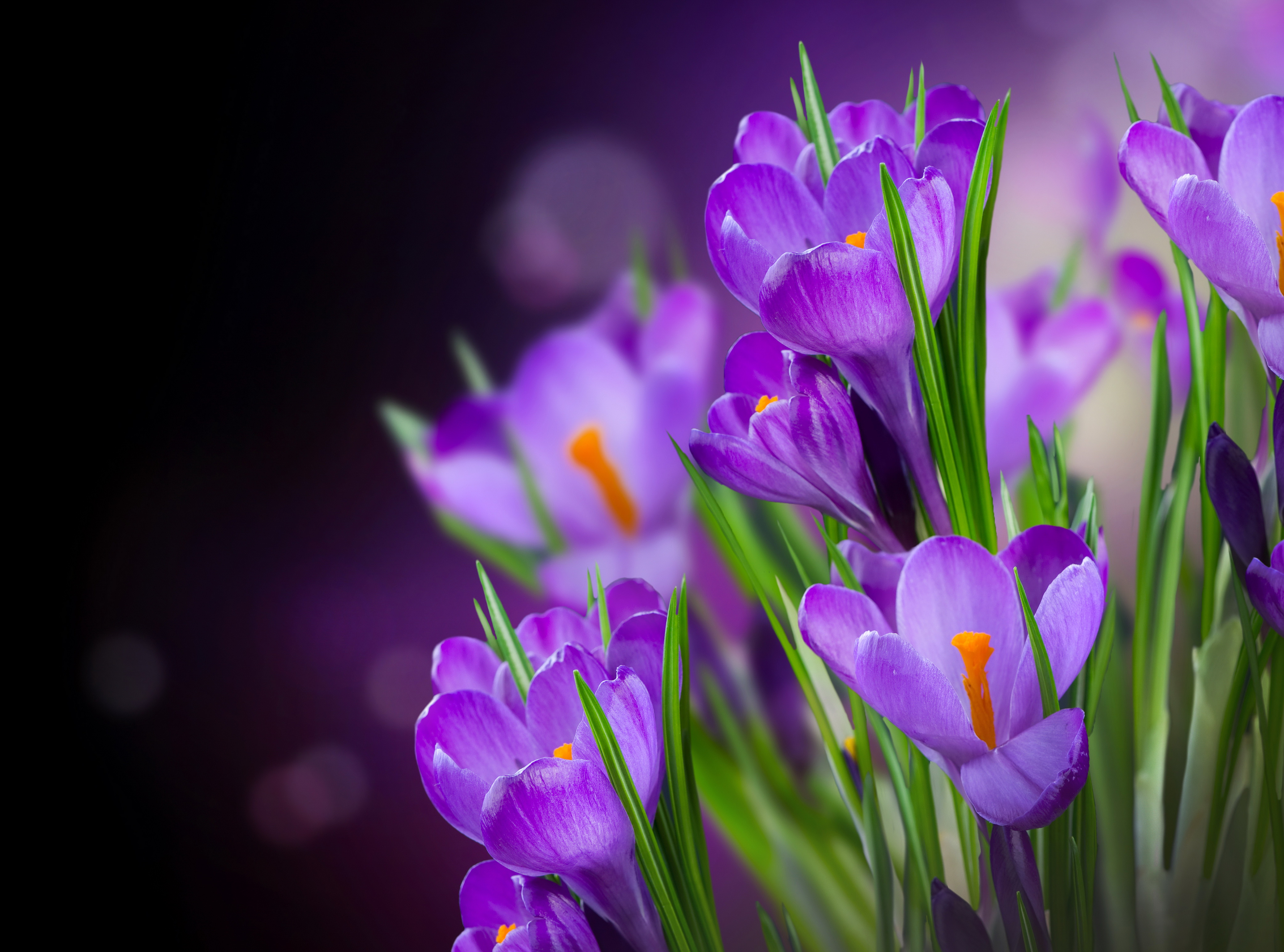 фиолетовые цветочки скачать