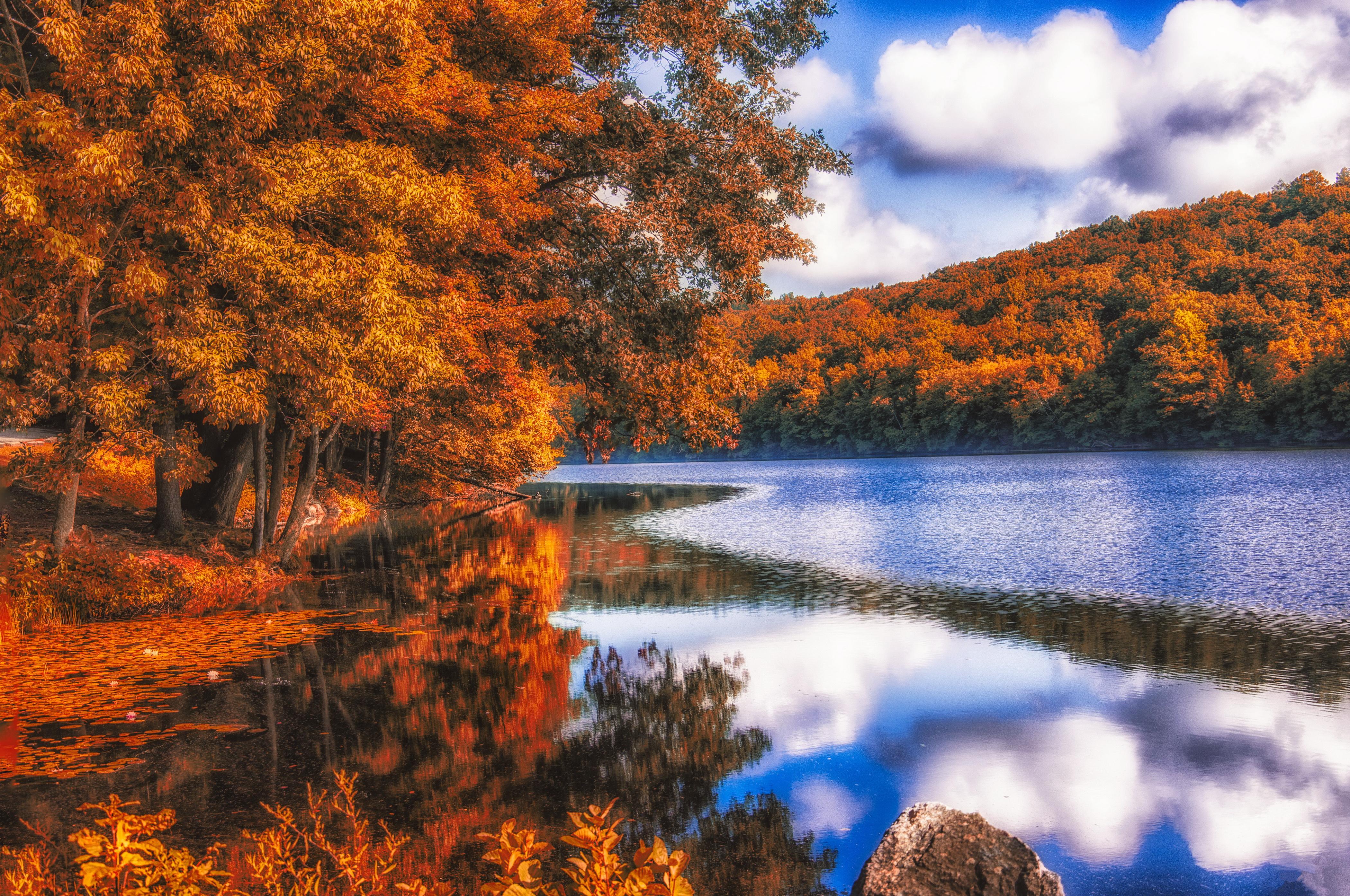 осенние деревья у озера без смс