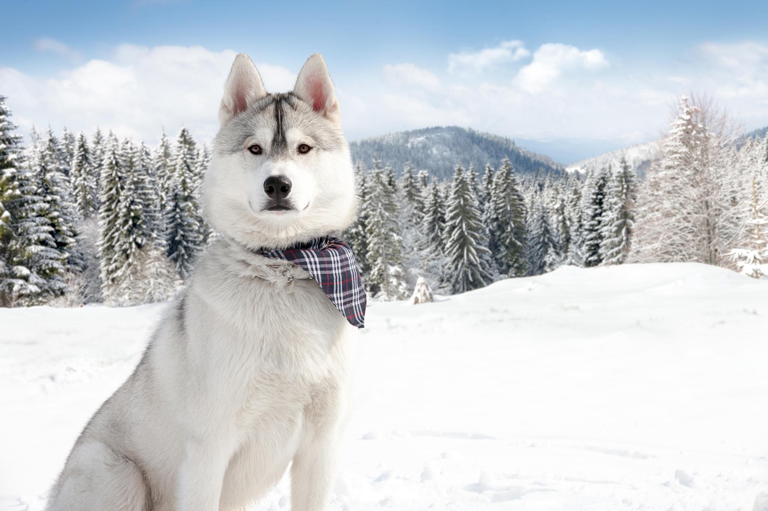 собака снег морда одиночество загрузить