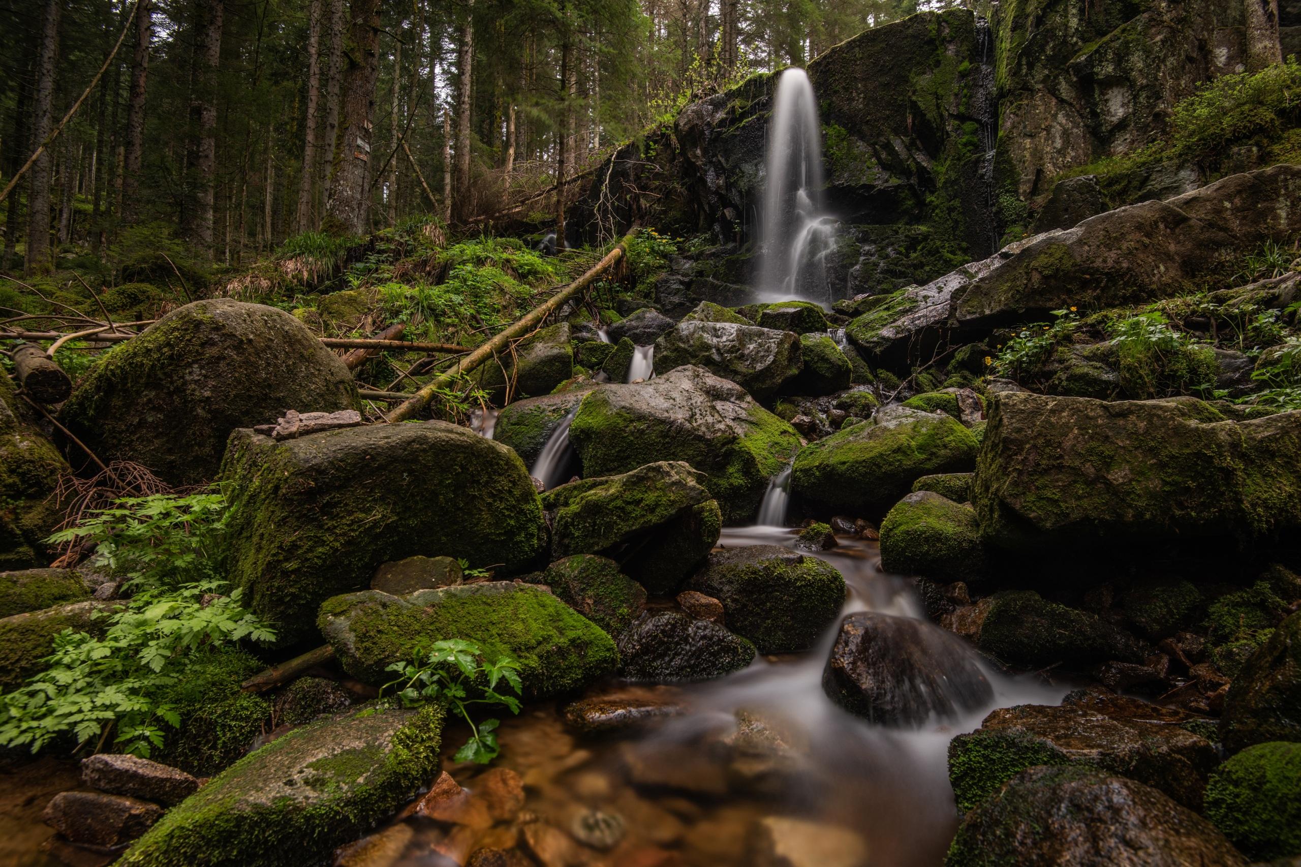 Фотографии Франция Cascade de Merelle скале Природа Водопады Леса Мох Камни 2560x1706 Утес скалы Скала мха мхом Камень
