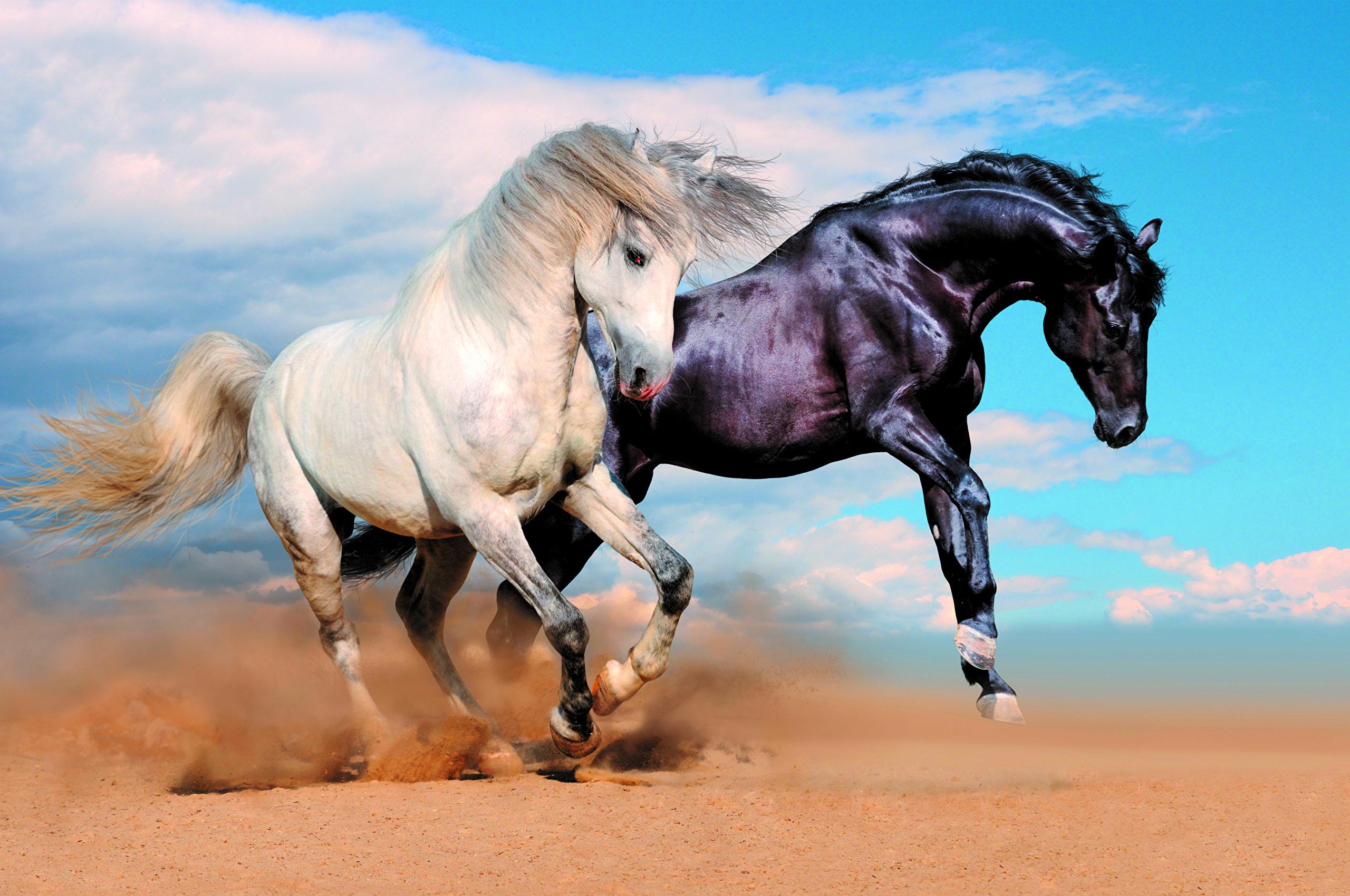 Три белые лошади загрузить