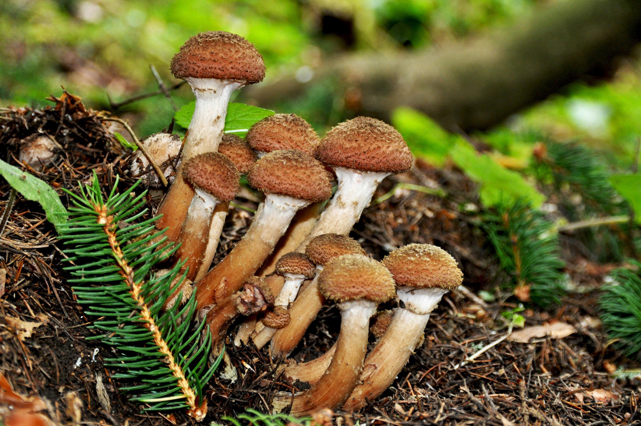 грибы загрузить