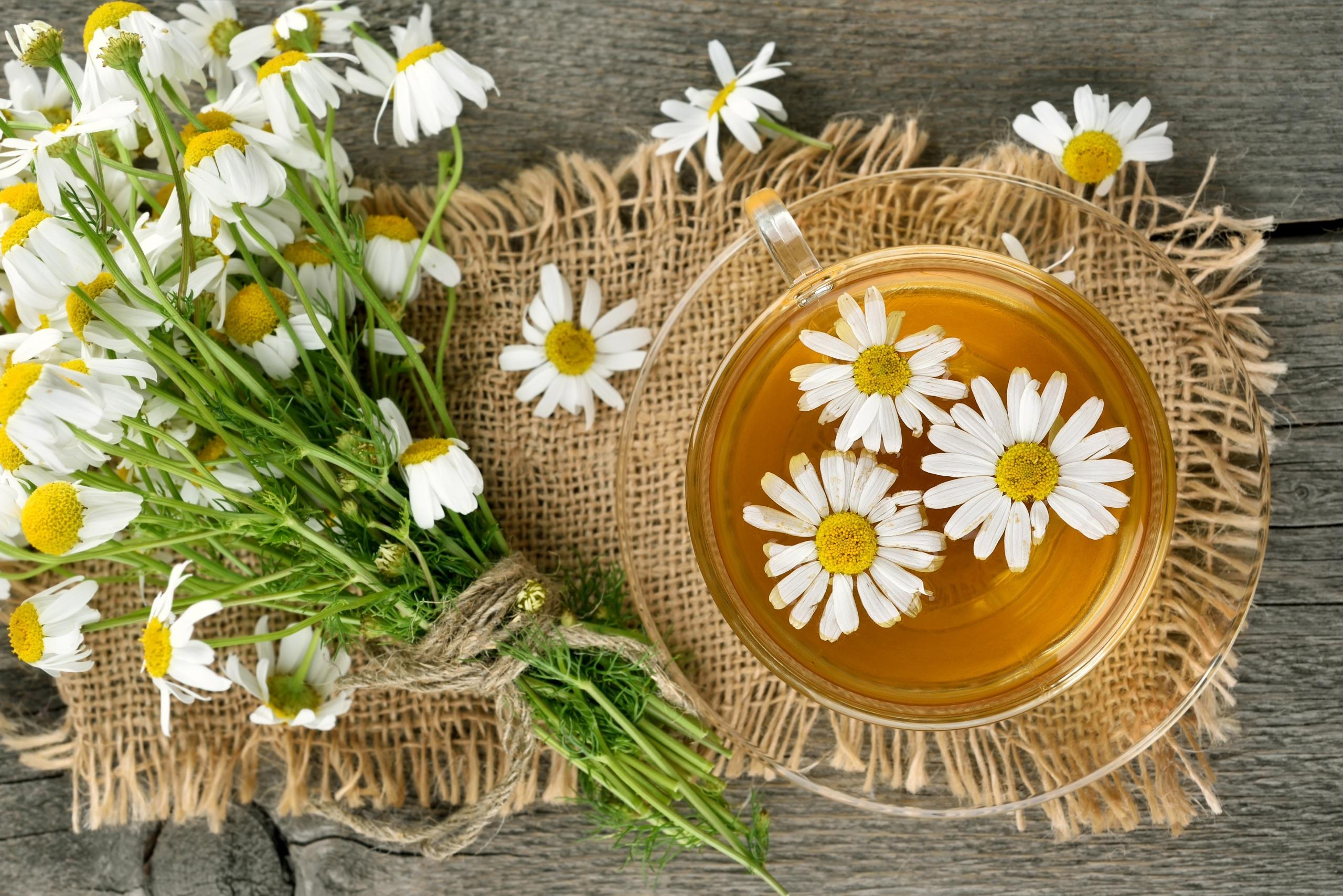 Фотография Чай Ромашки чашке Продукты питания 2560x1708 ромашка Еда Пища Чашка