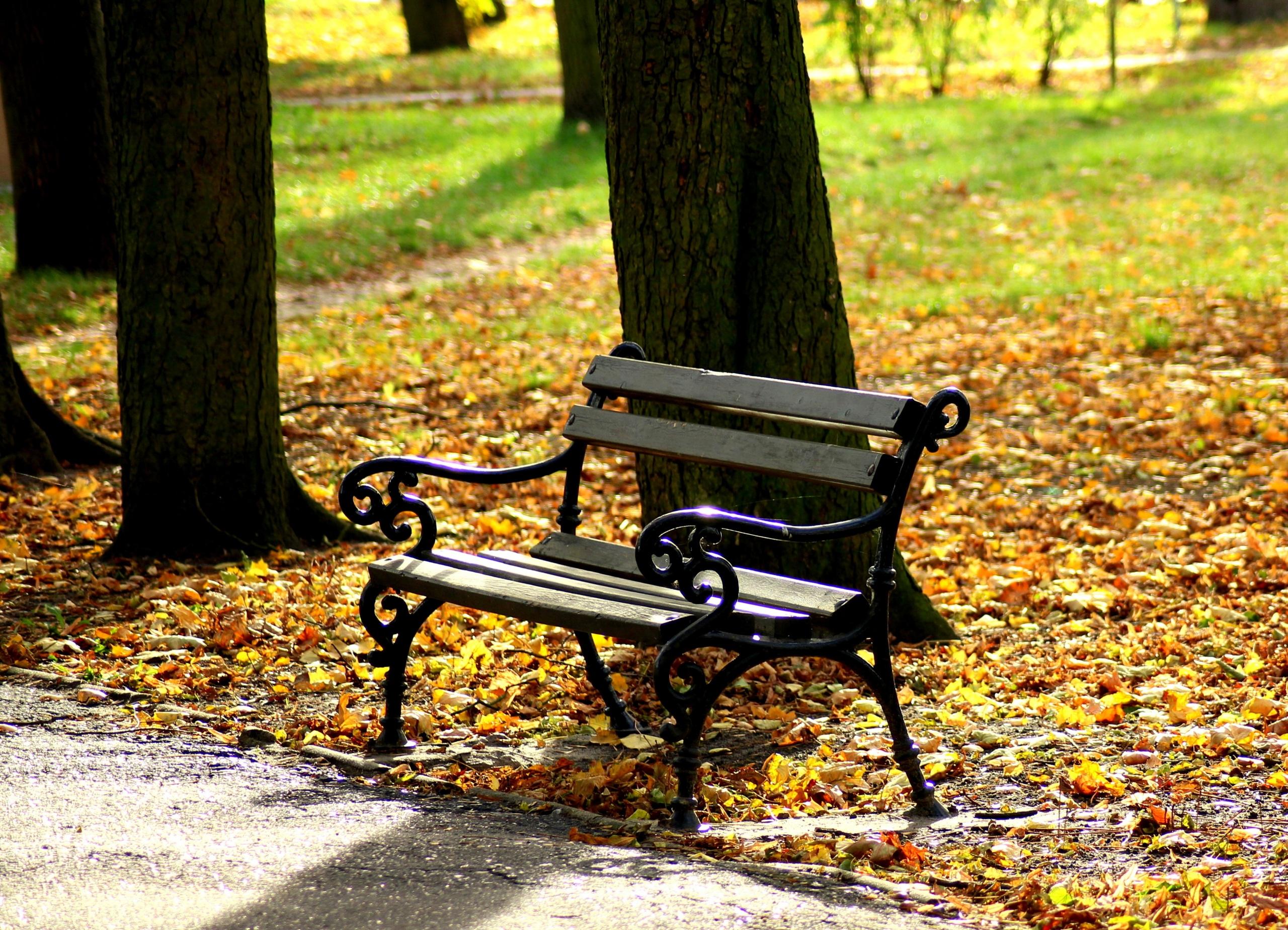 Картинка Листва Осень Природа Скамья 2560x1848 лист Листья осенние Скамейка