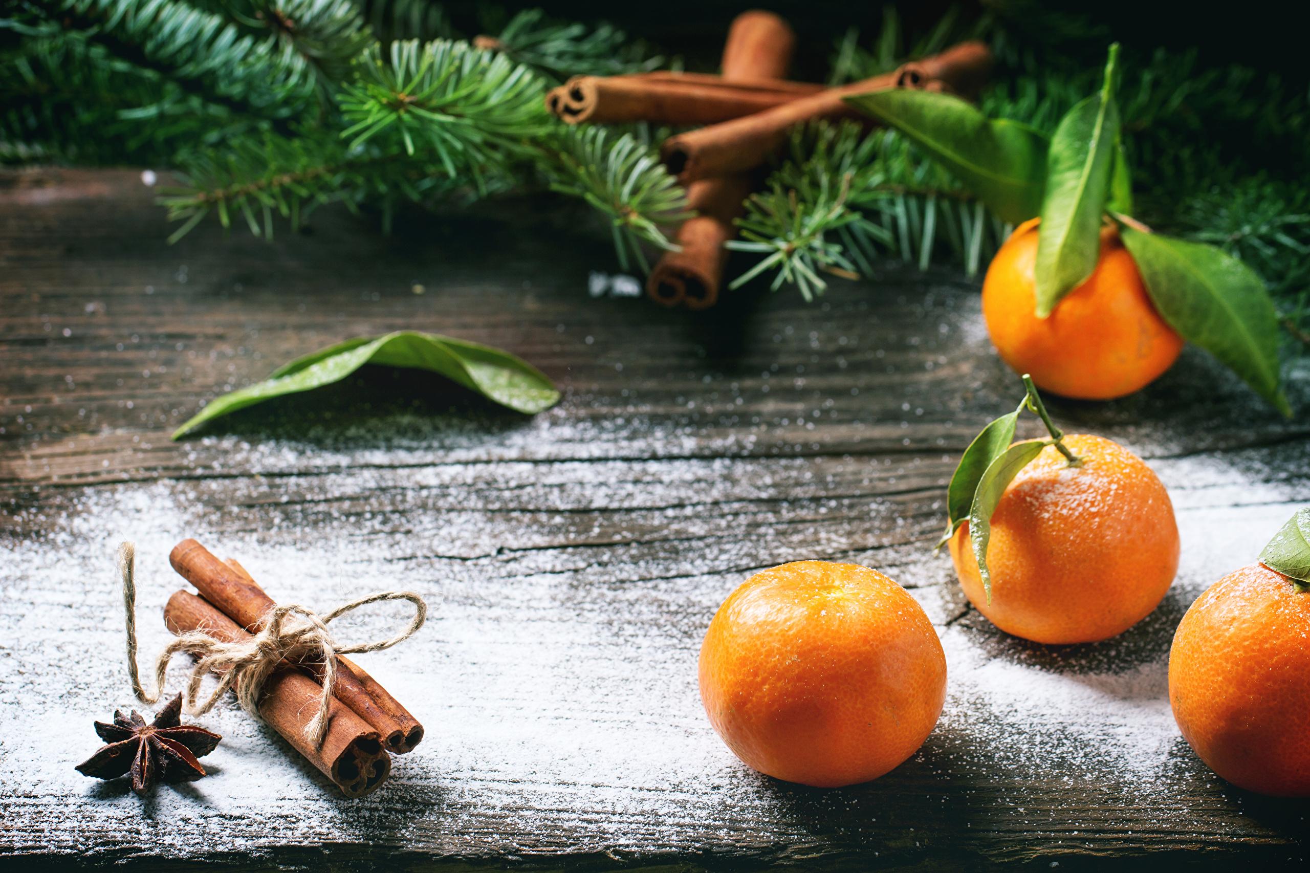 Девушка под апельсиновым деревом загрузить