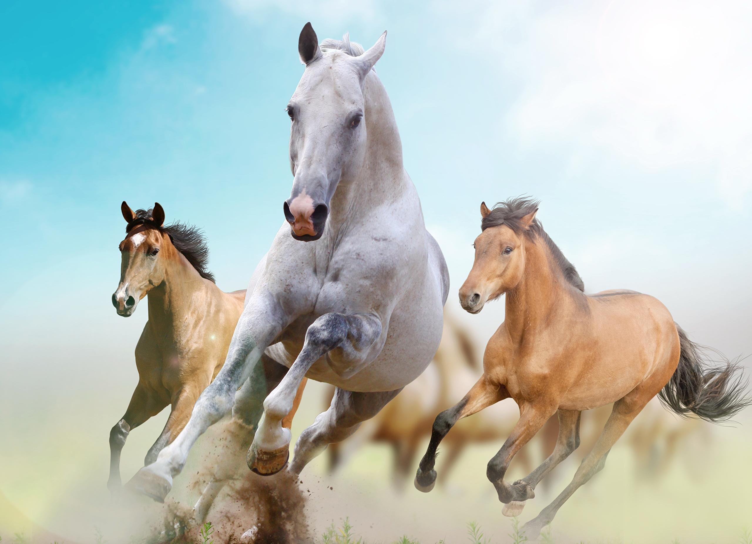 Лошадь части креатив загрузить
