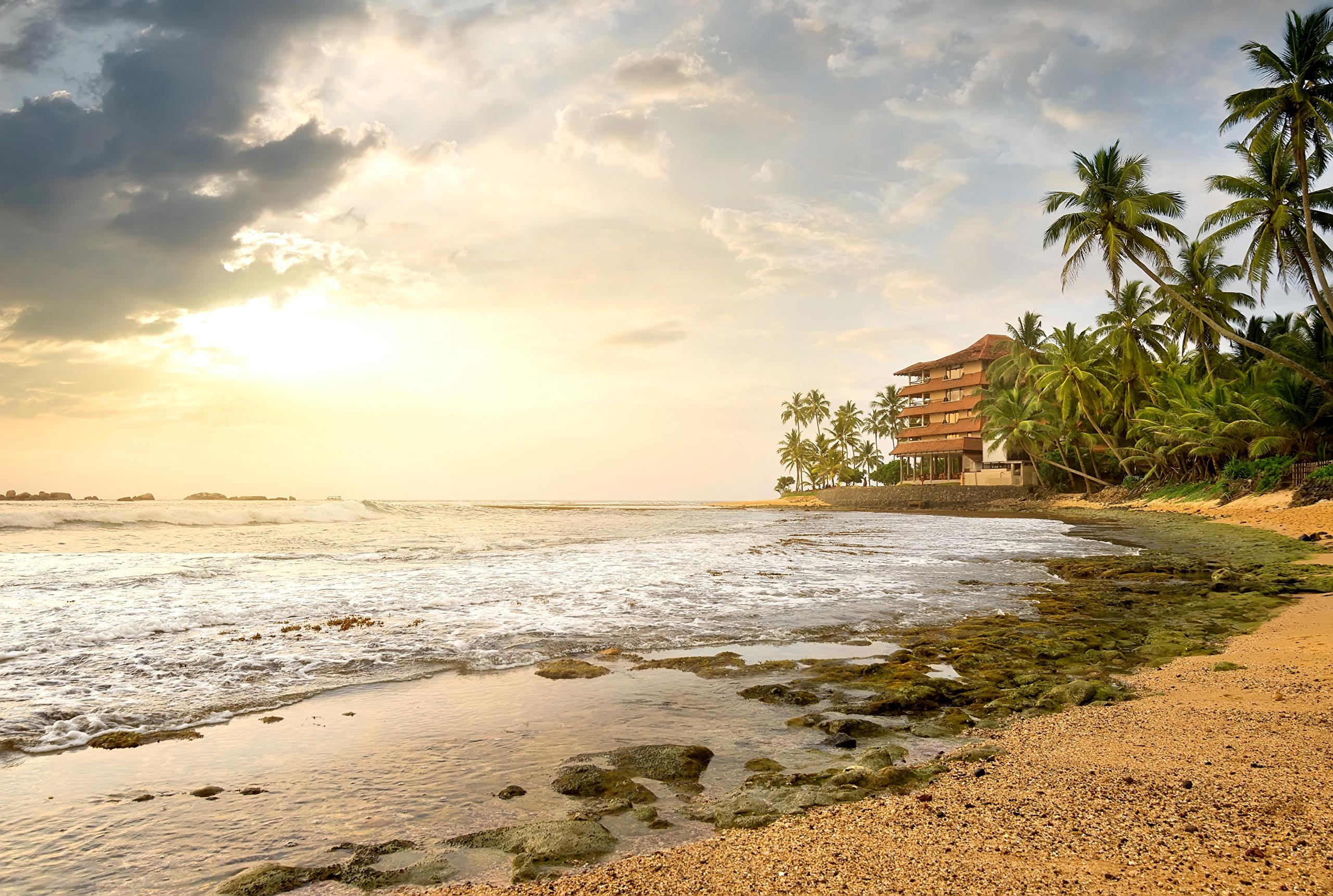 Шри-Ланка Тропики Пейзаж Побережье Небо Море Пальмы Облака берег Природа