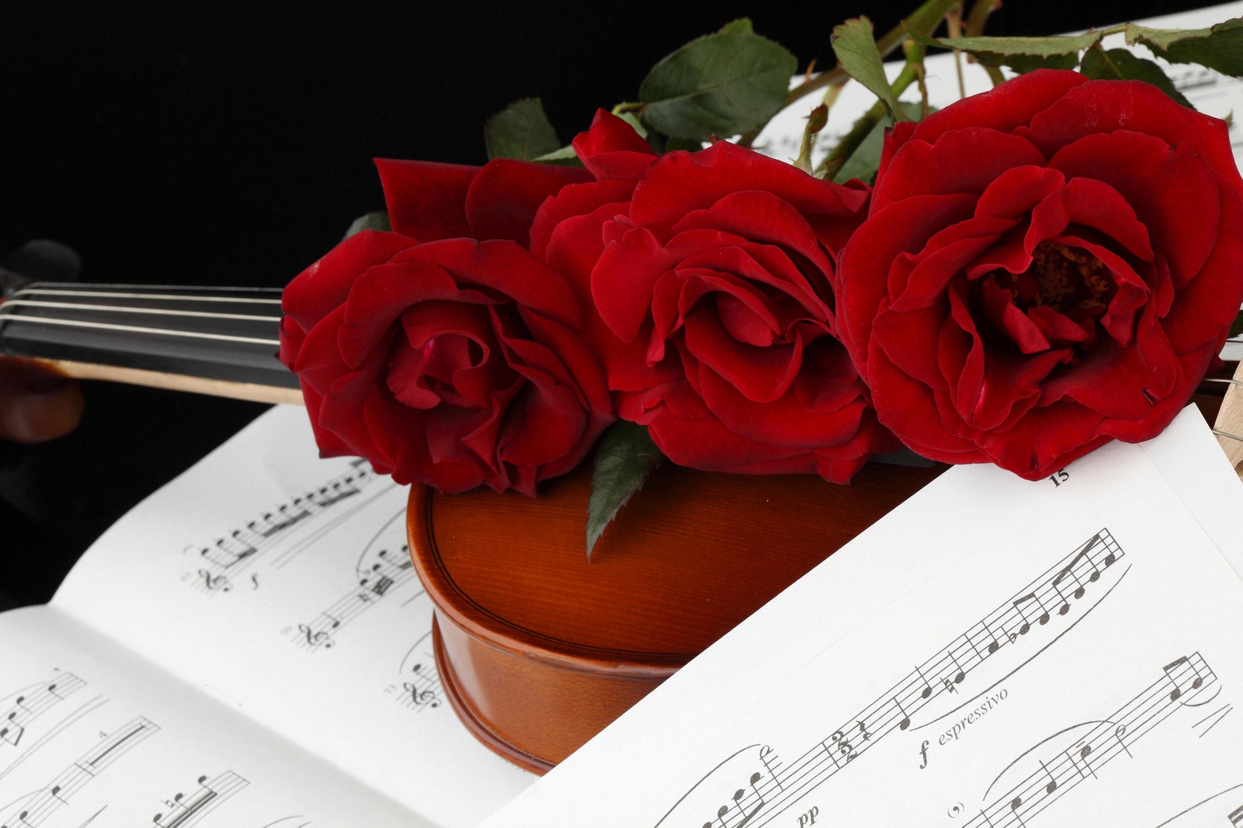 Фотографии Ноты Розы бордовые цветок Трое 3 2560x1706 роза Бордовый бордовая темно красный Цветы три втроем