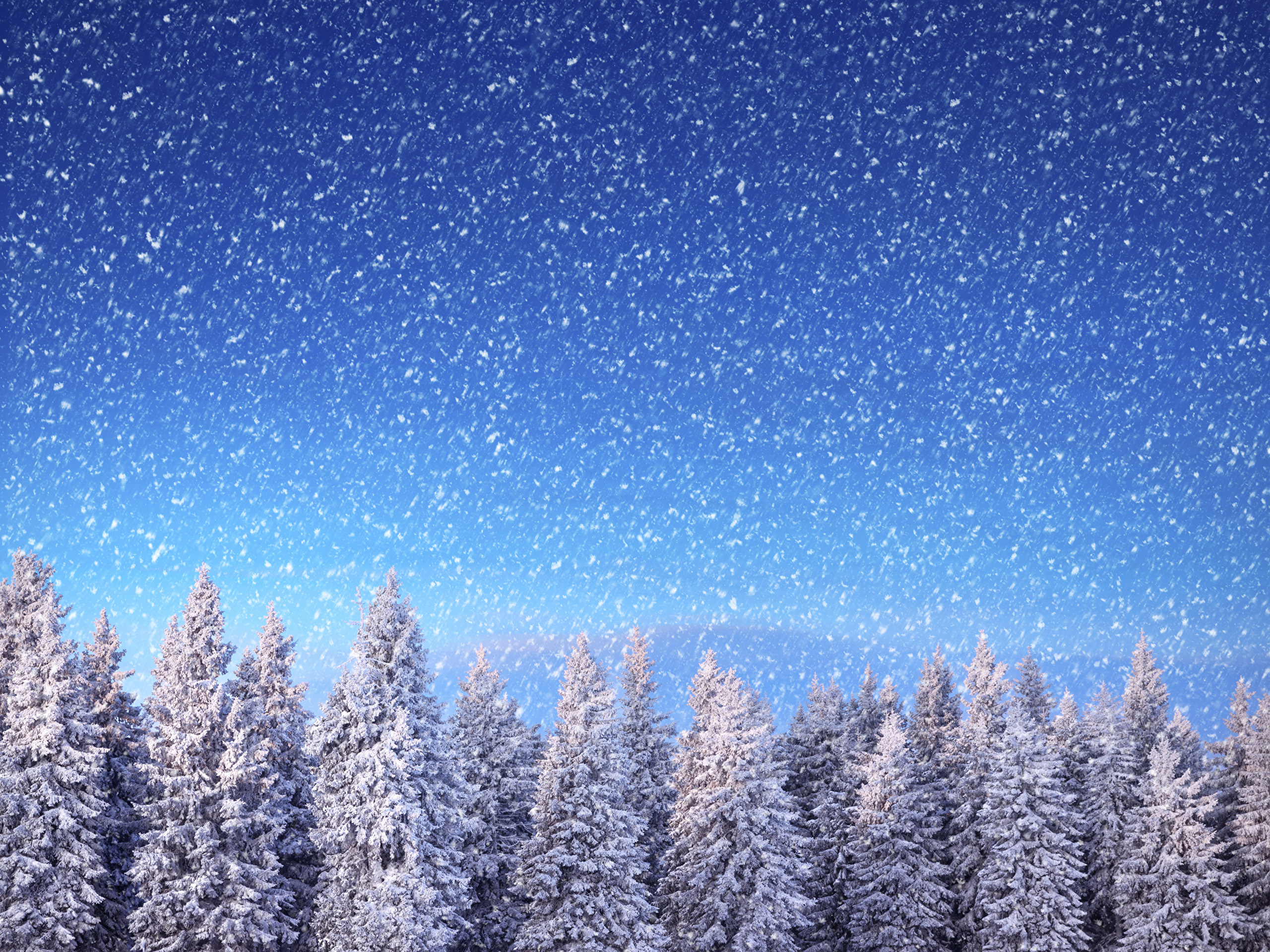 природа снег ели лес зима скачать
