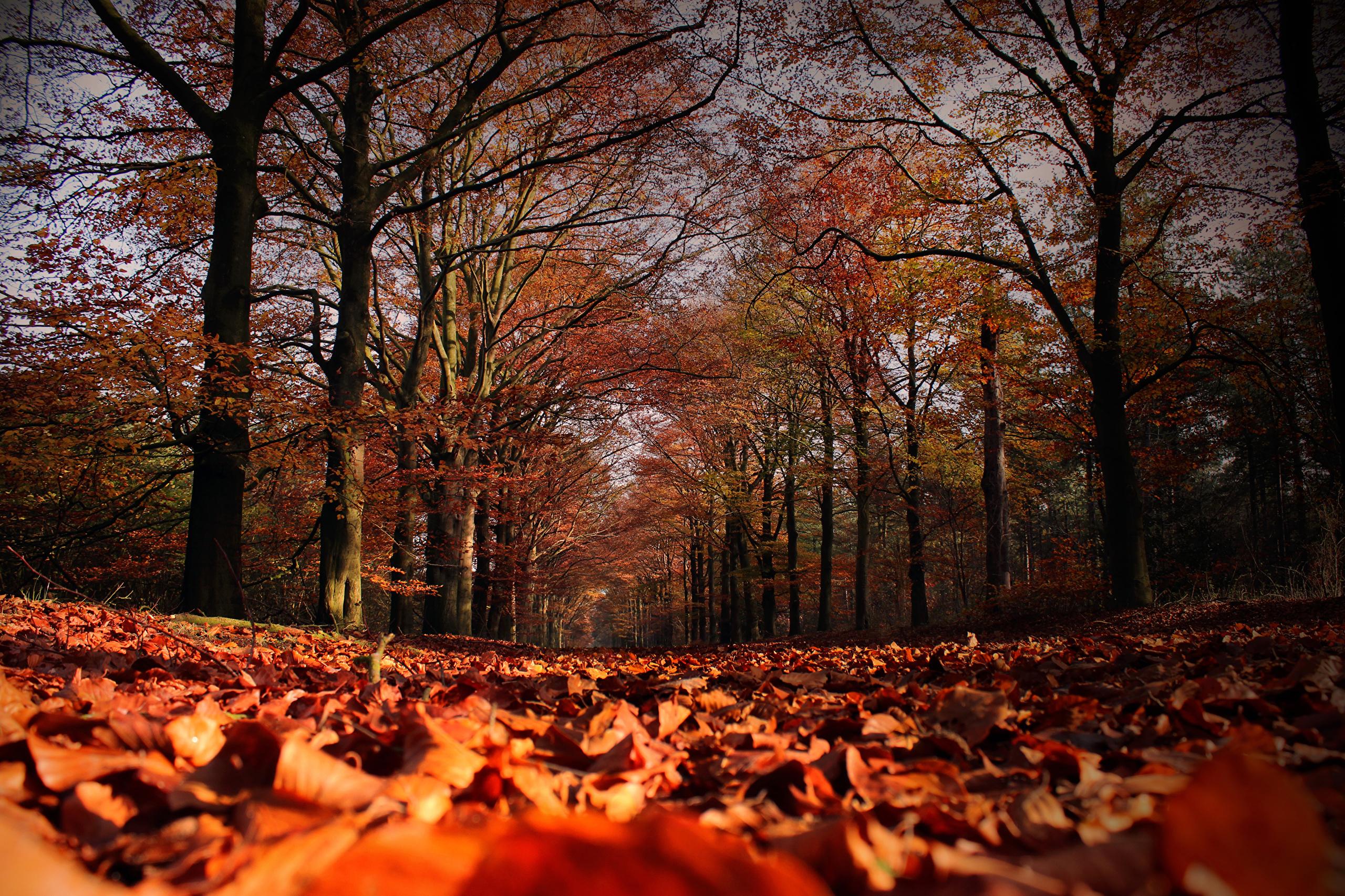 лес, осень, листопад скачать