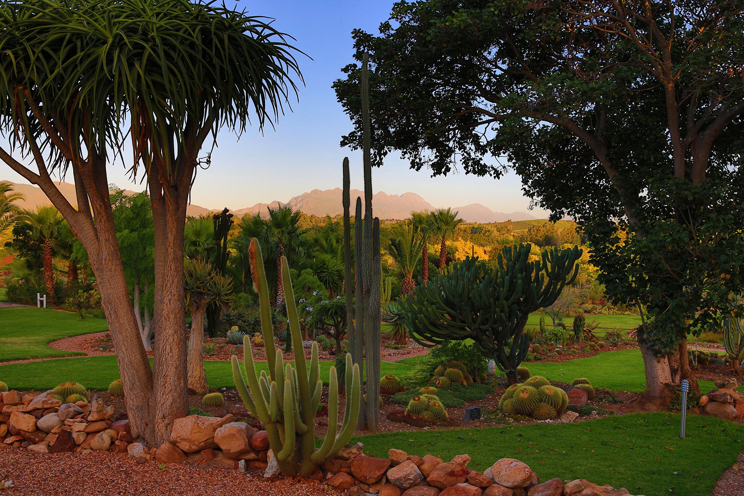 Картинки Африка Южно-Африканская Республика Природа Парки Кактусы деревьев 2560x1706 ЮАР парк дерево дерева Деревья