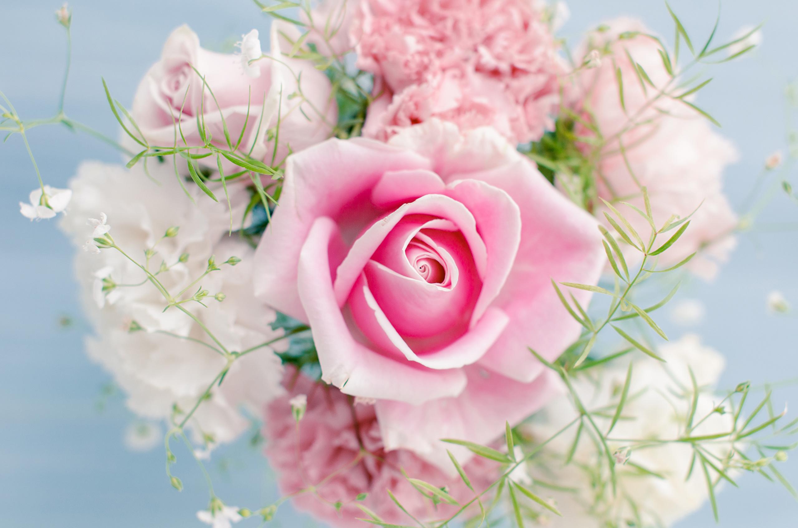розовые цветы букет природа скачать