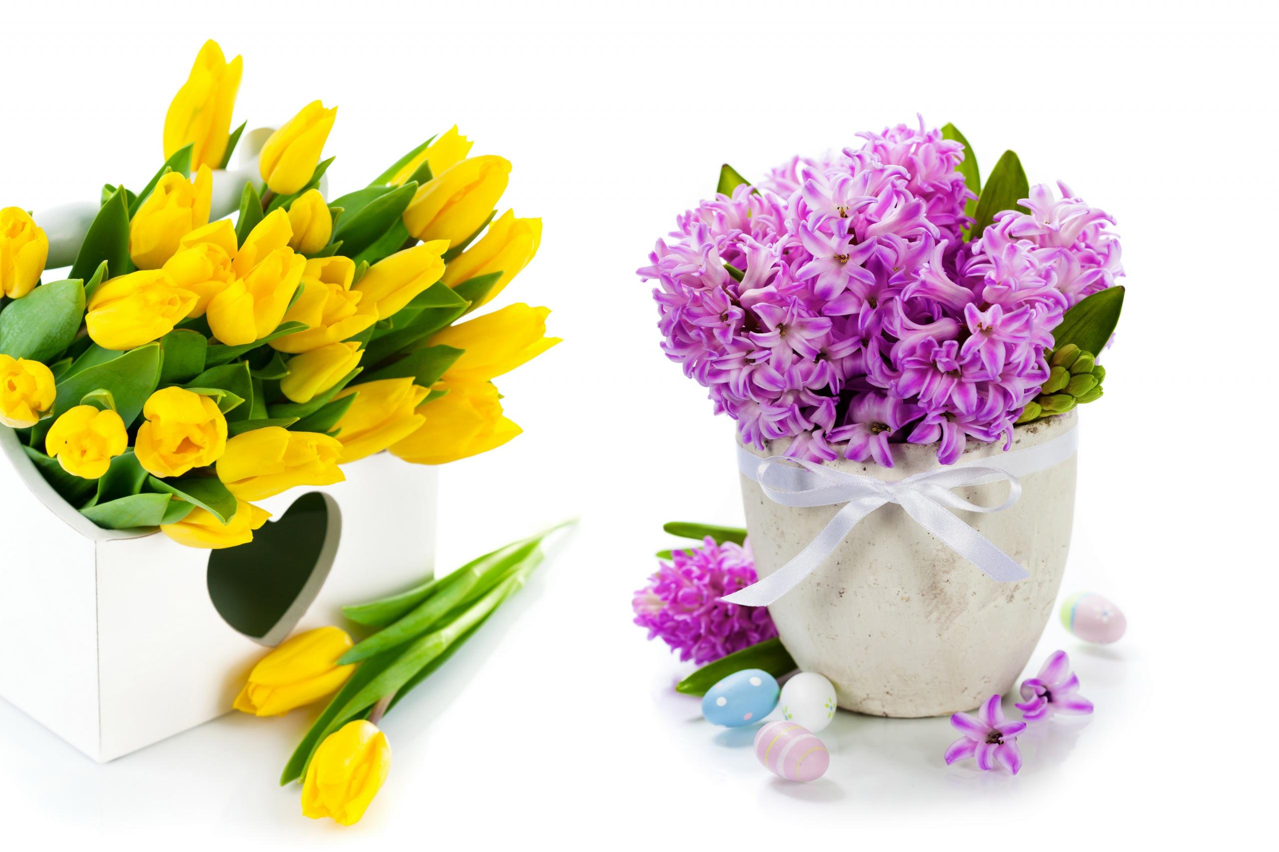 Обои для рабочего стола Яйца Тюльпаны Цветы Ваза Гиацинты белом фоне 2560x1706 яиц яйцо яйцами тюльпан цветок вазы вазе Белый фон белым фоном
