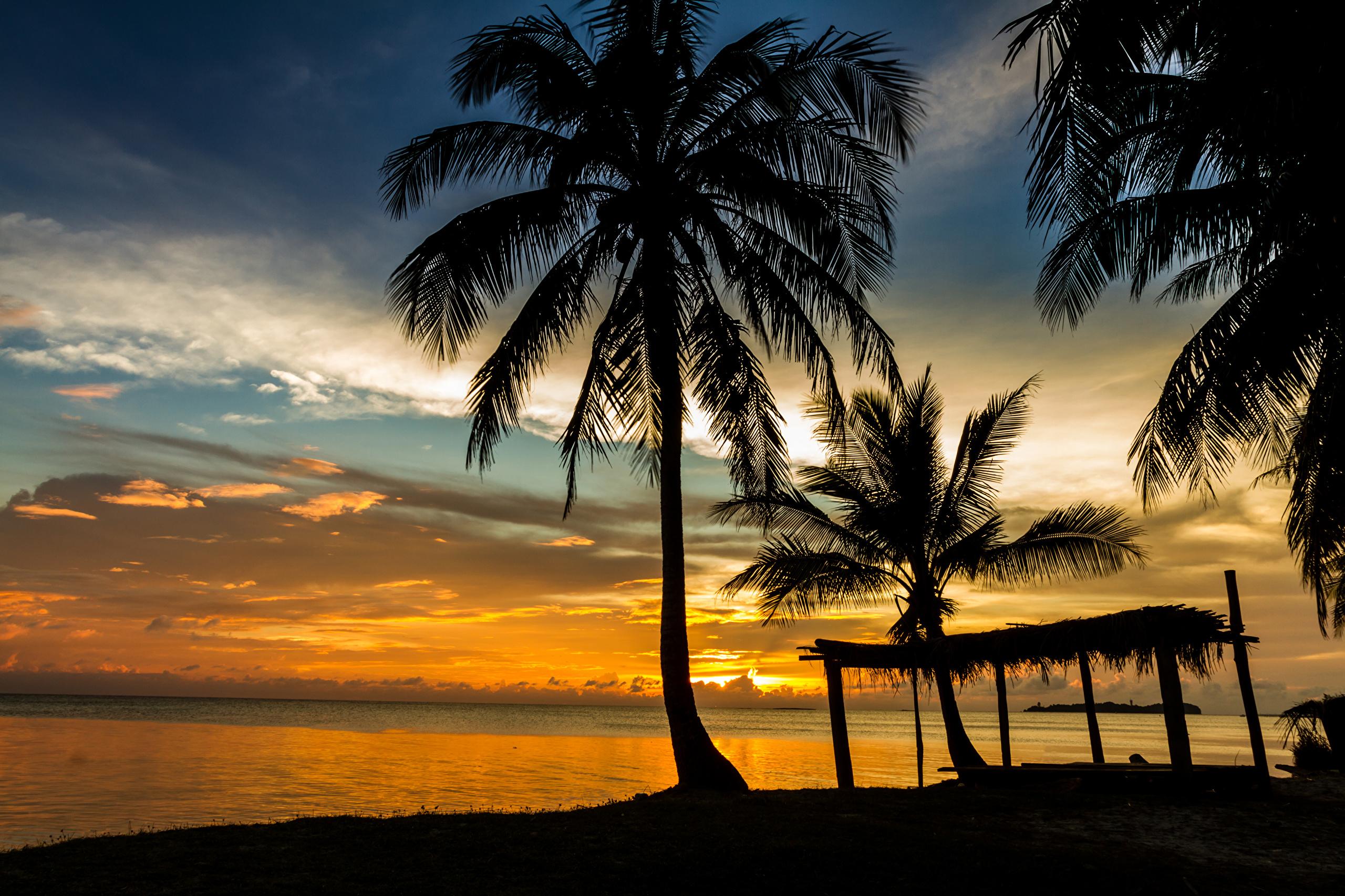 закат море пальмы скачать