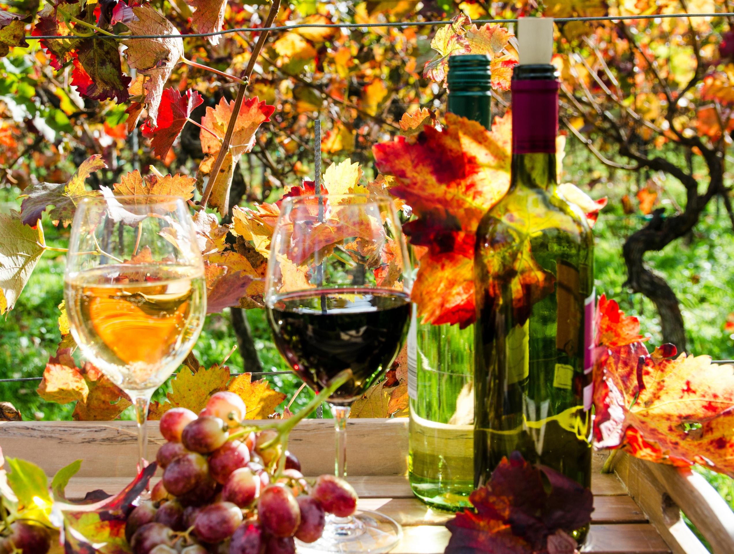 Обои для рабочего стола Листья Вино Осень Виноград Бокалы Бутылка Продукты питания 2541x1920 лист Листва осенние Еда Пища бокал бутылки